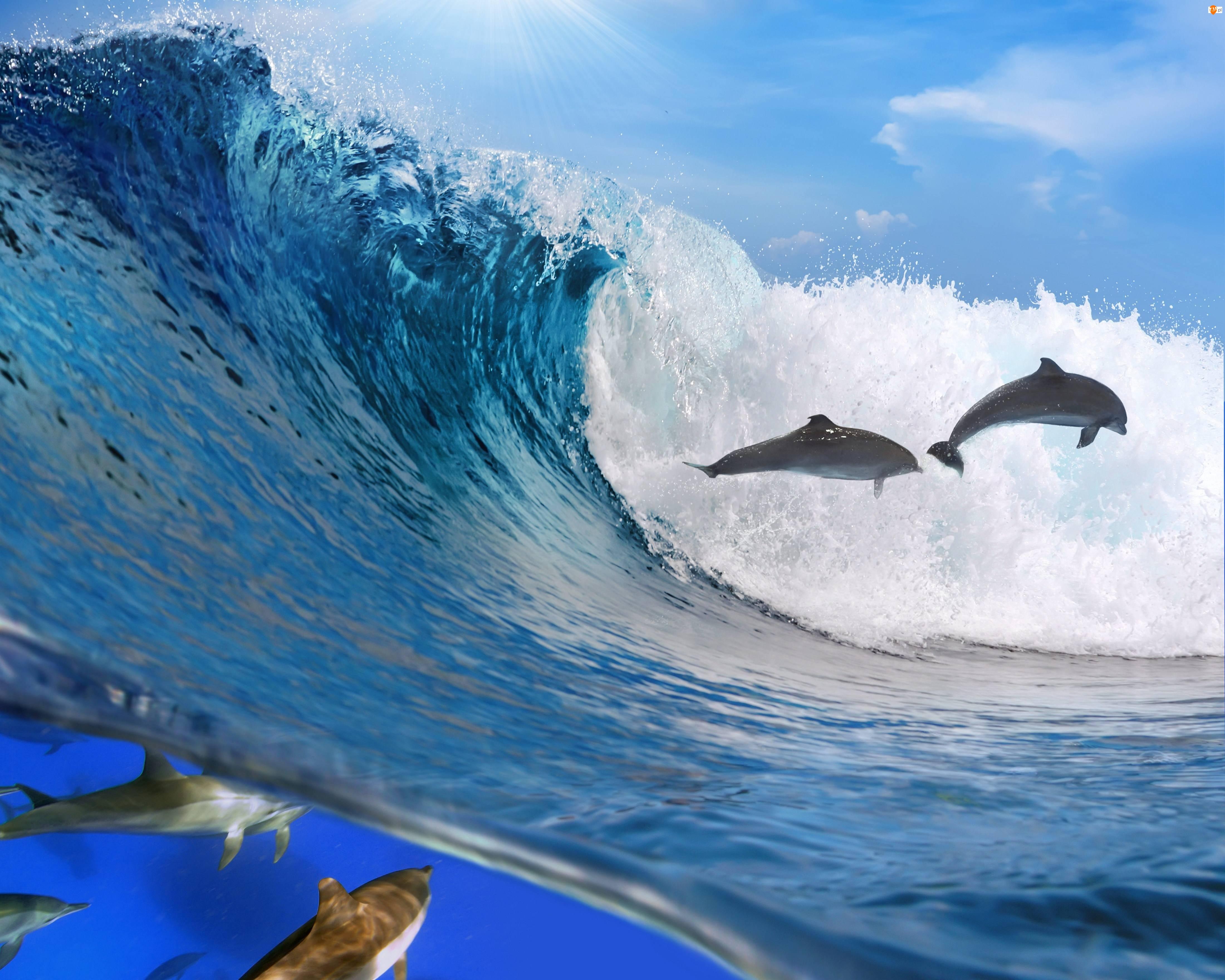 Fala, Morze, Delfiny