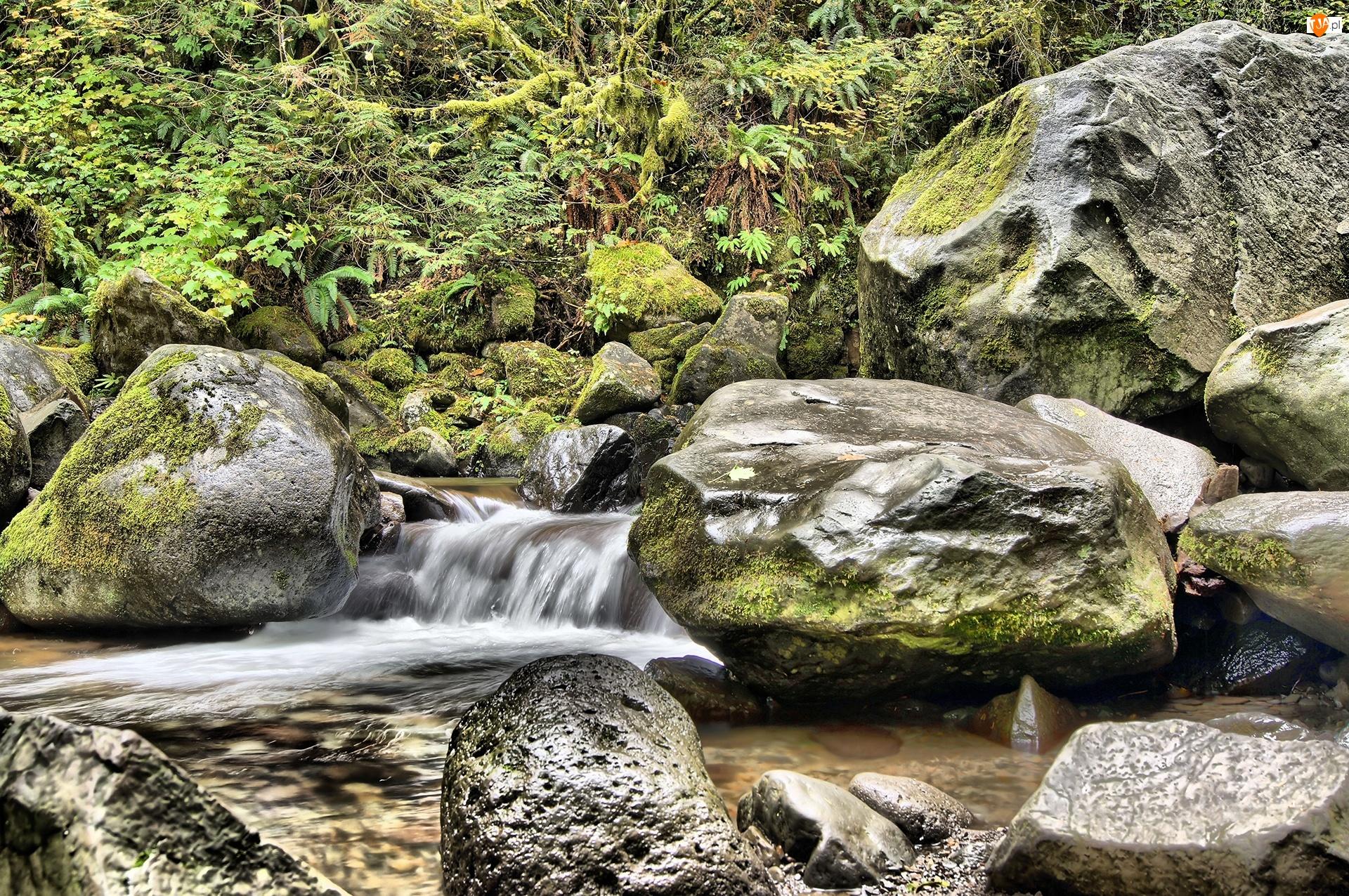 Kamienie, Rośliny, Rwący, Potok