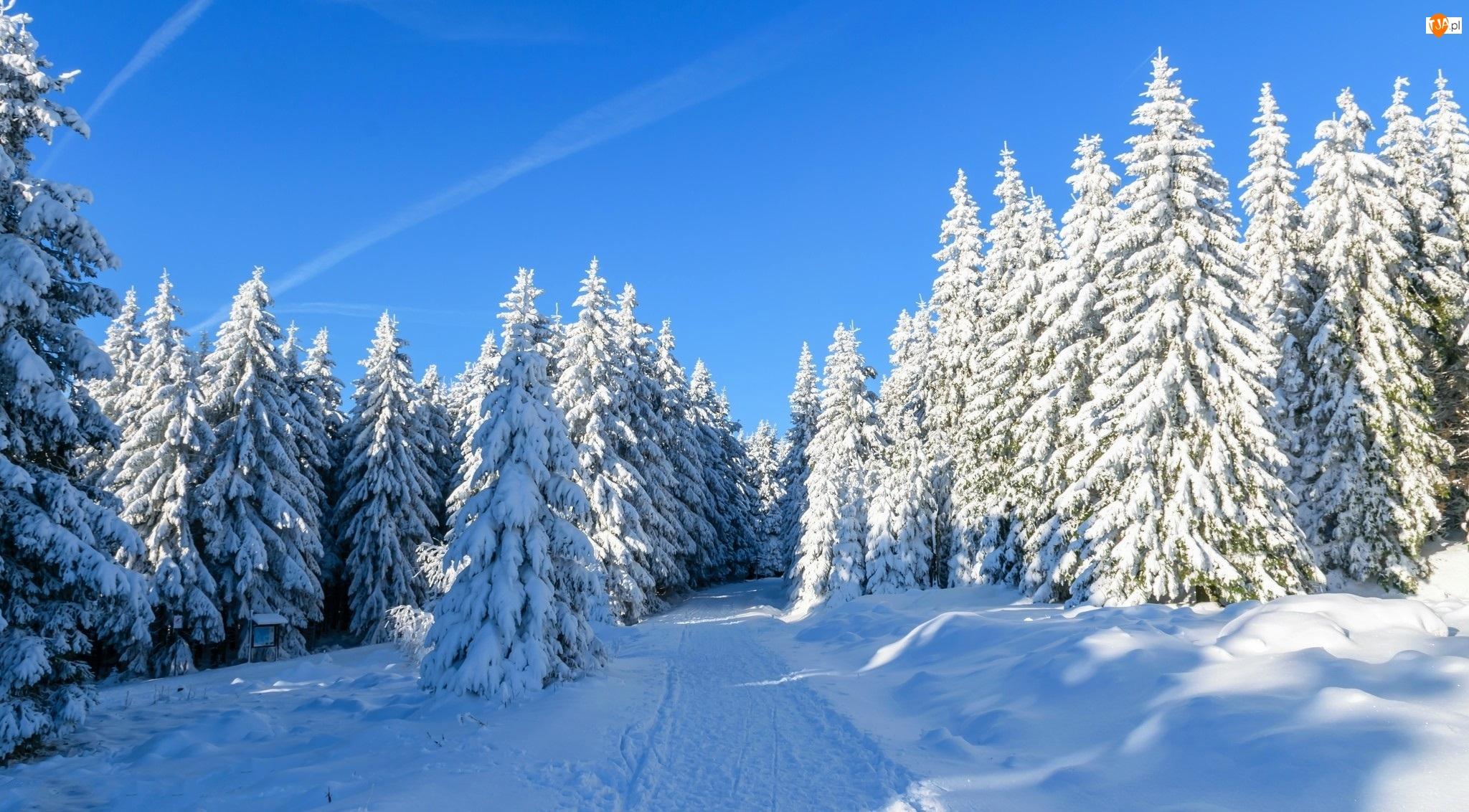 Śnieg, Zima, Świerki, Las, Ścieżka
