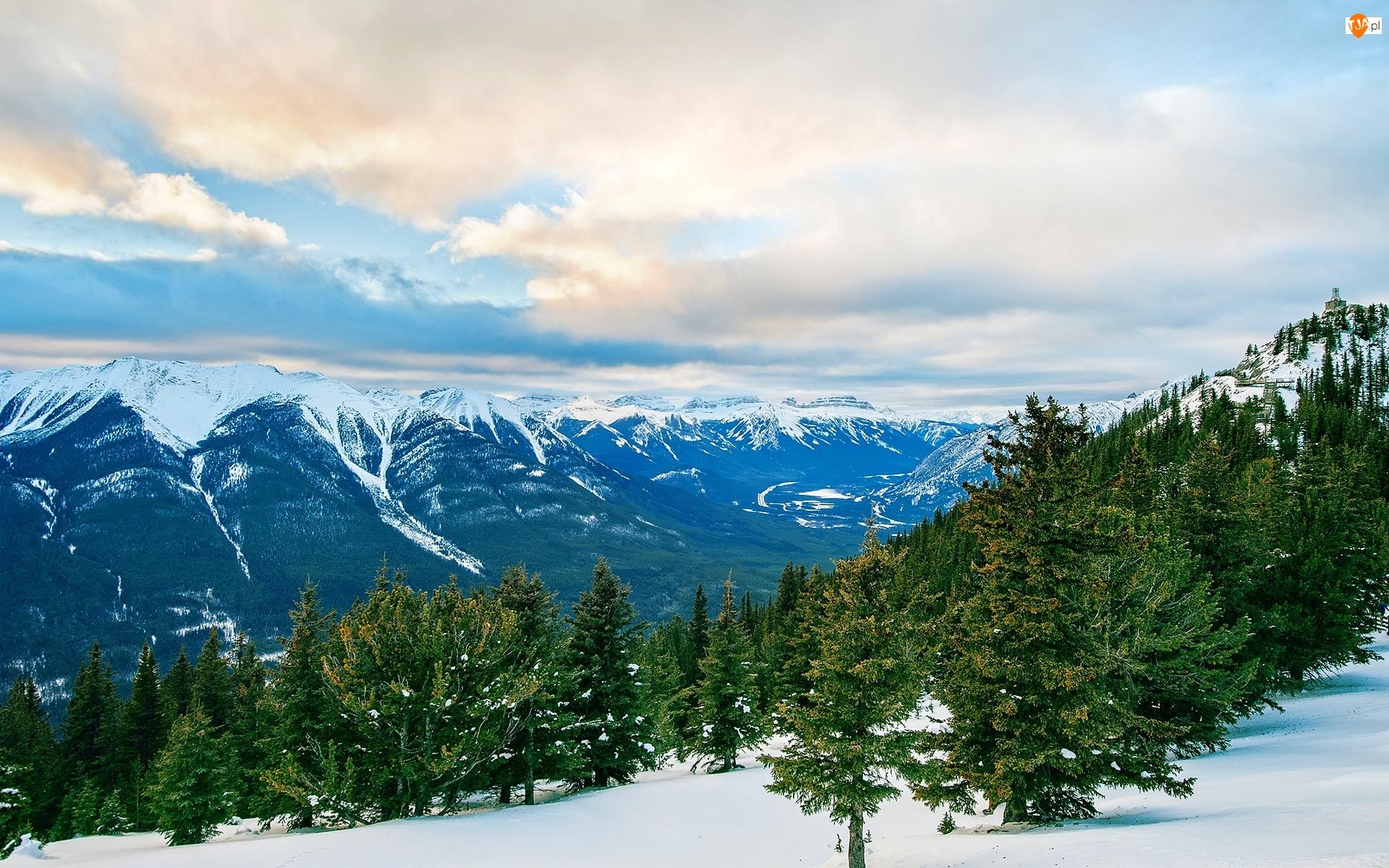 Świerki, Zima, Góry, Las, Drzewa
