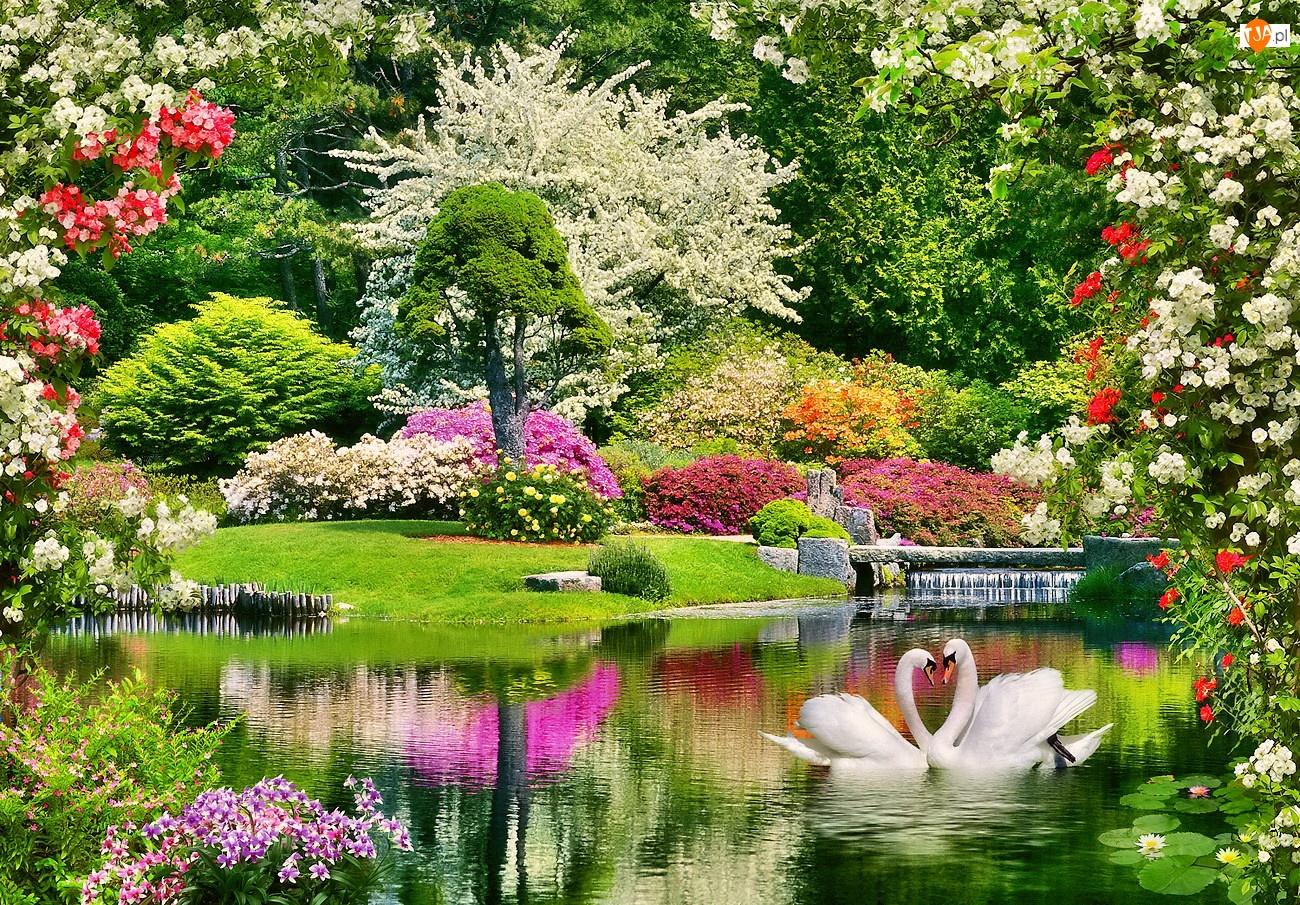 Wiosna, Łabędzie, Park, Staw