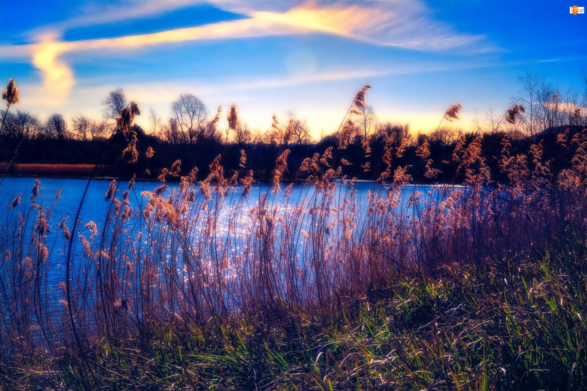 Jezioro, Trawka
