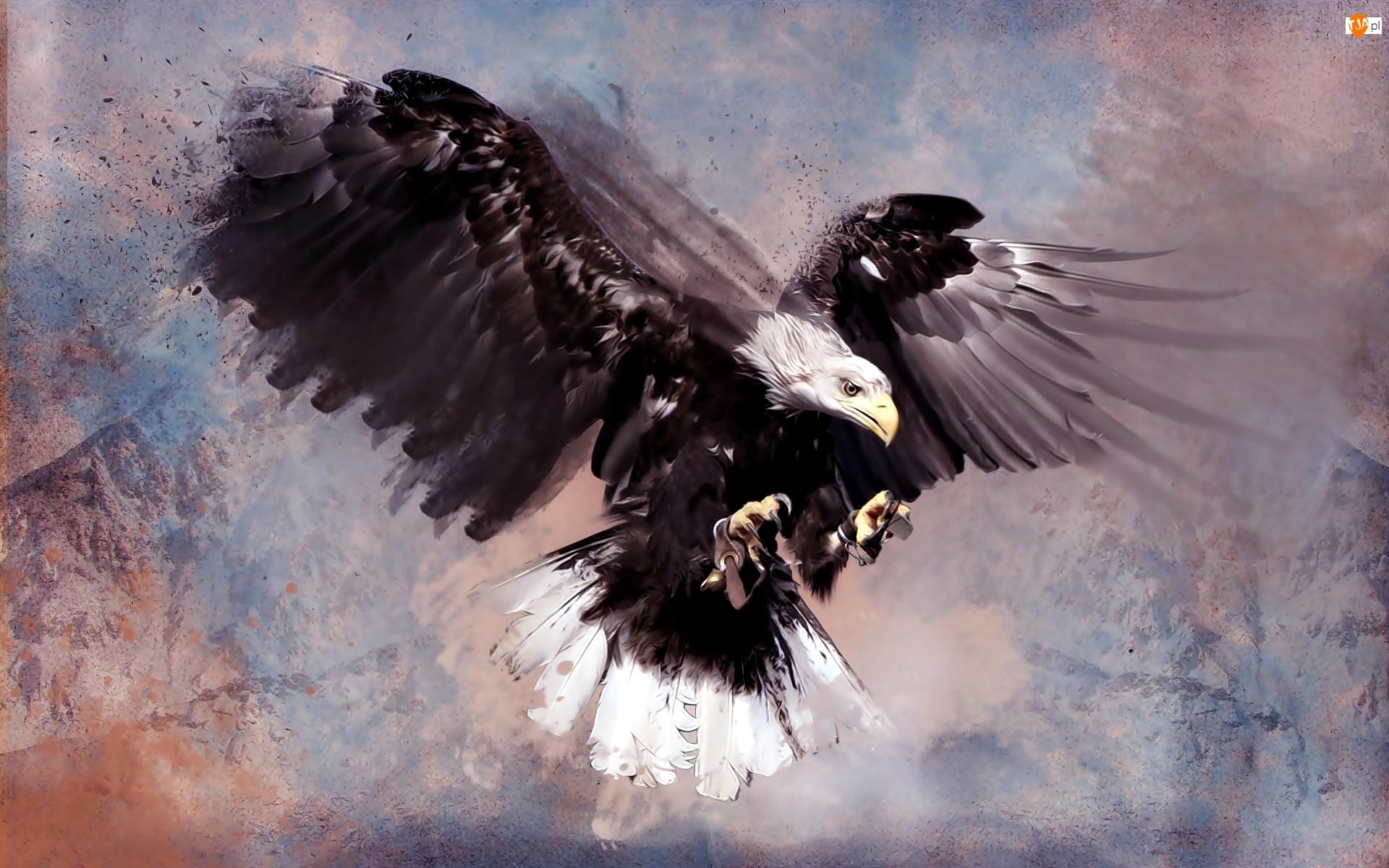 Rysunek, Bielik amerykański