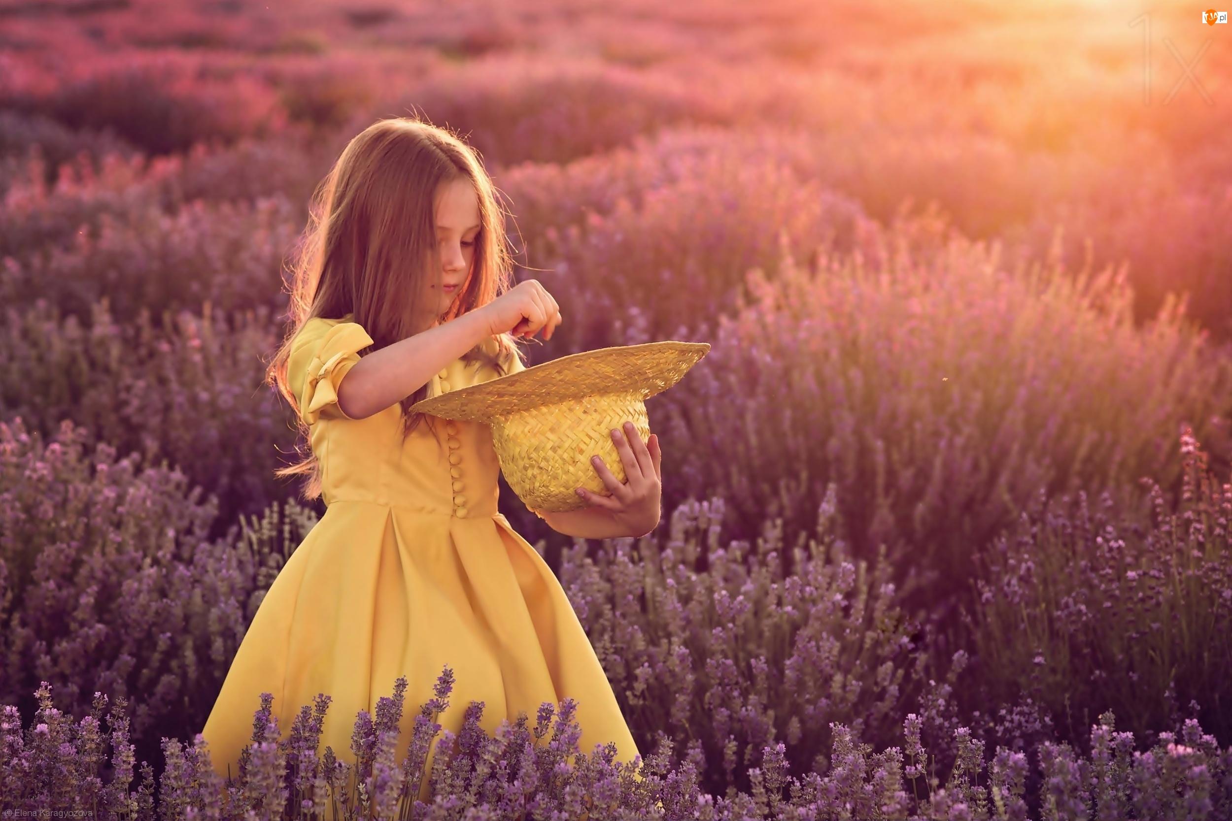 Pole, Promienie, Dziewczynka, Słońca, Kapelusz, Lawenda