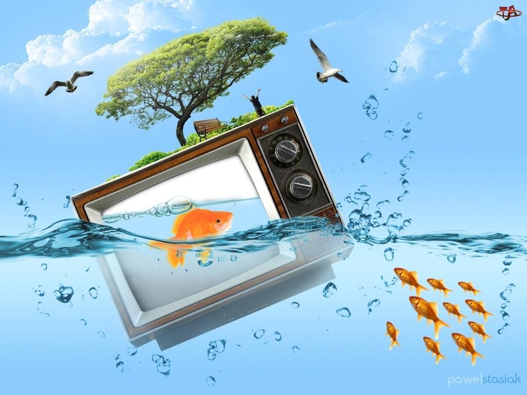 drzewo, niebo, woda, ptaki, złota rybka, telewizor