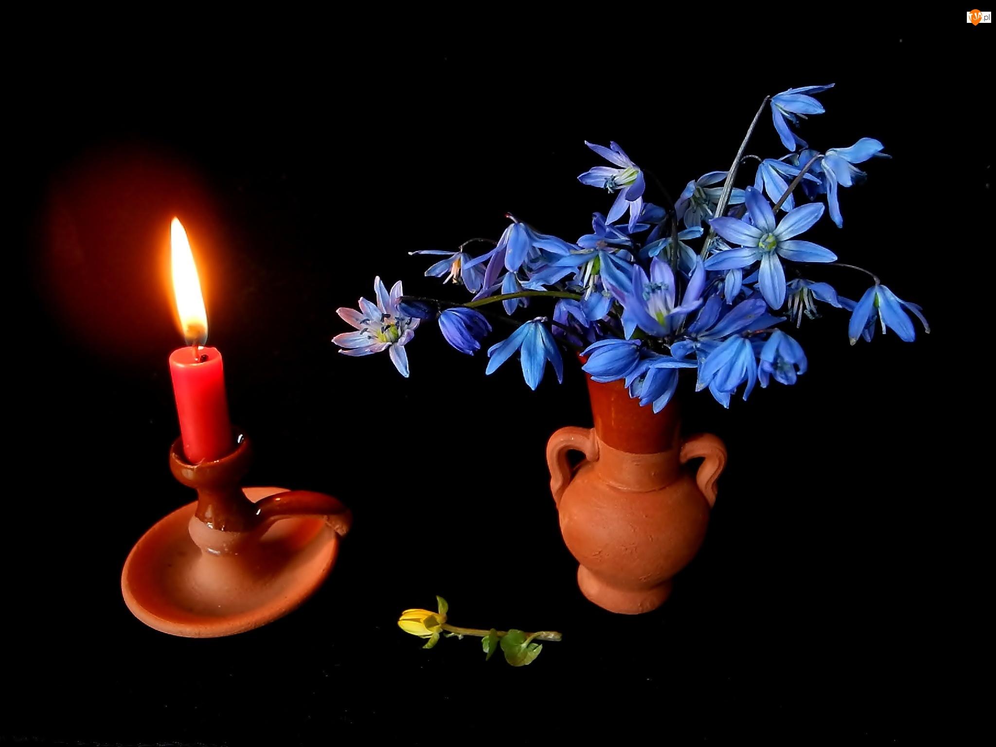 Cebulica syberyjska, Kompozycja, Świeca, Flakon, Bukiet Kwiatów