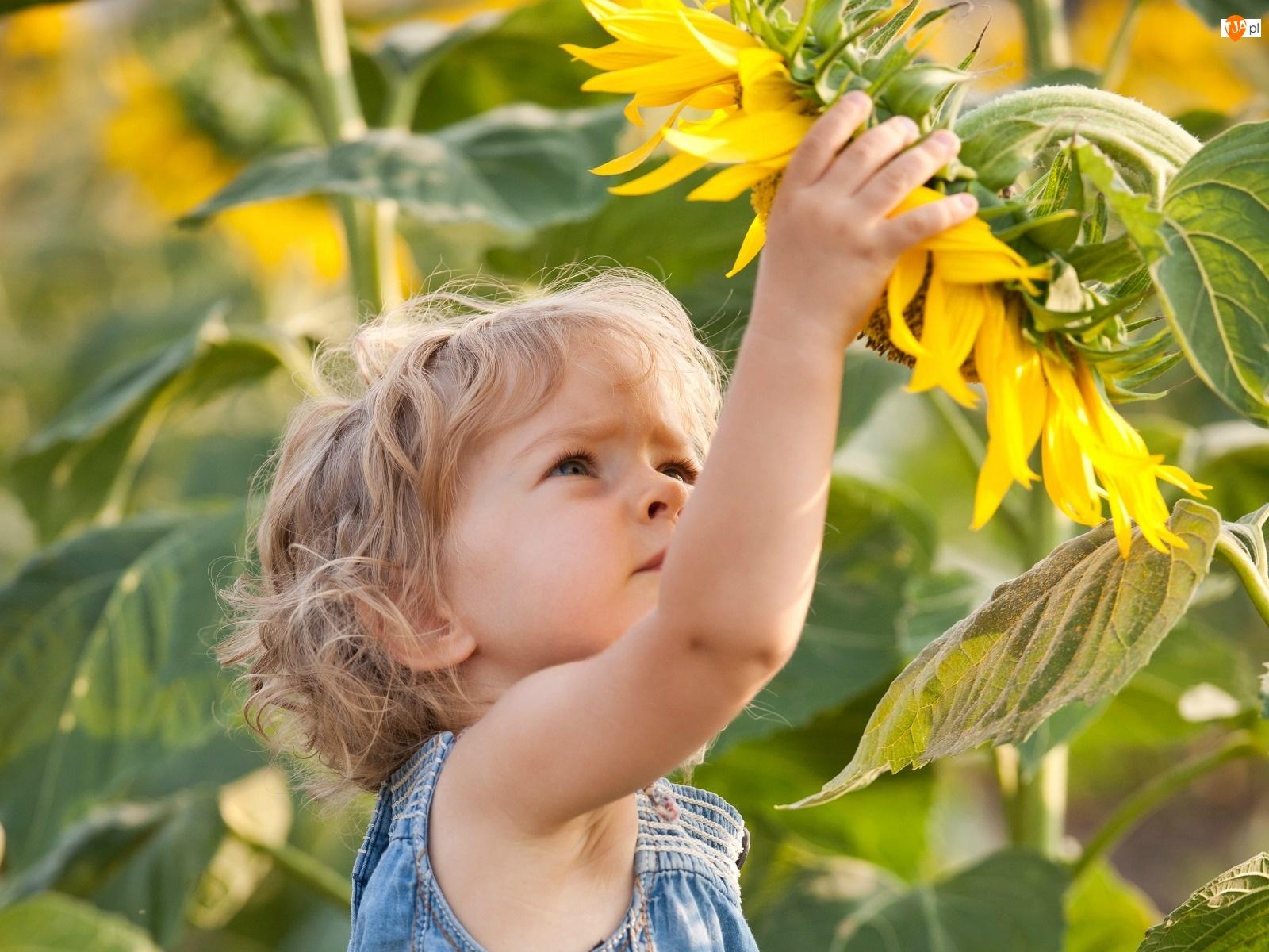 Mała, Słoneczniki, Dziewczynka, Ogród