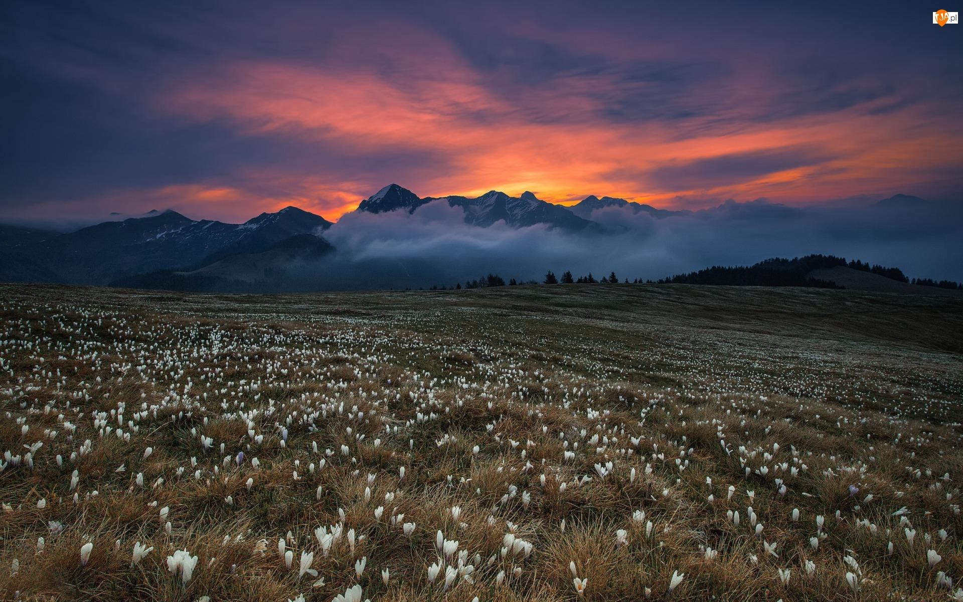 Zachód słońca, Krokusy, Góry, Łąka, Chmury, Kwiaty