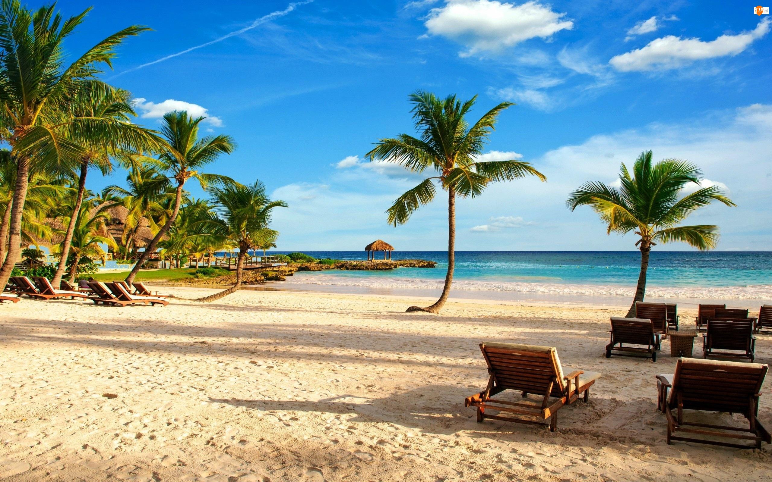 Wakacje, Ocean, Palma, Plaża, Leżaki