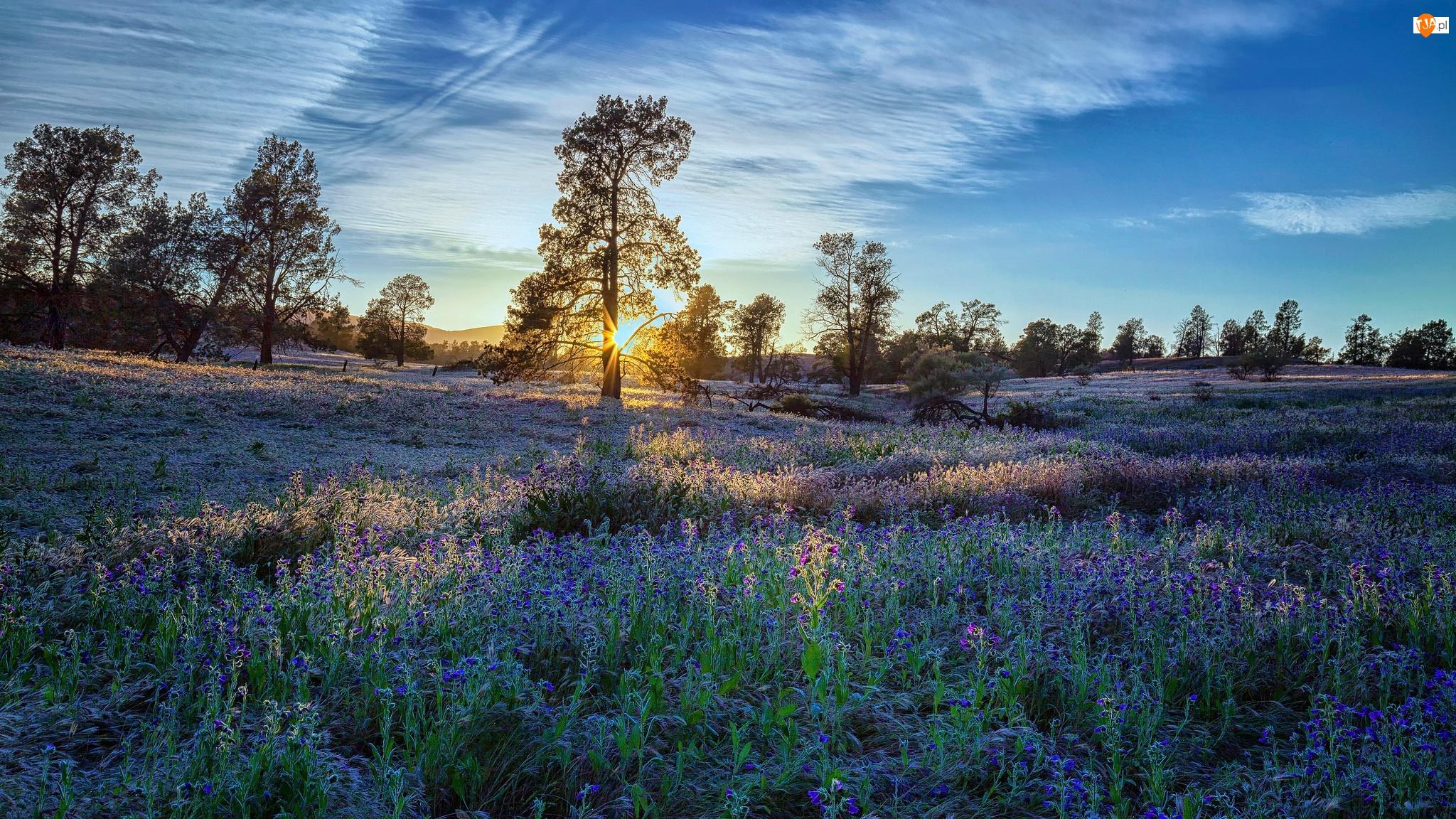 Wschód Słońca, Wzgórza, Kwiaty, Łąka, Drzewa