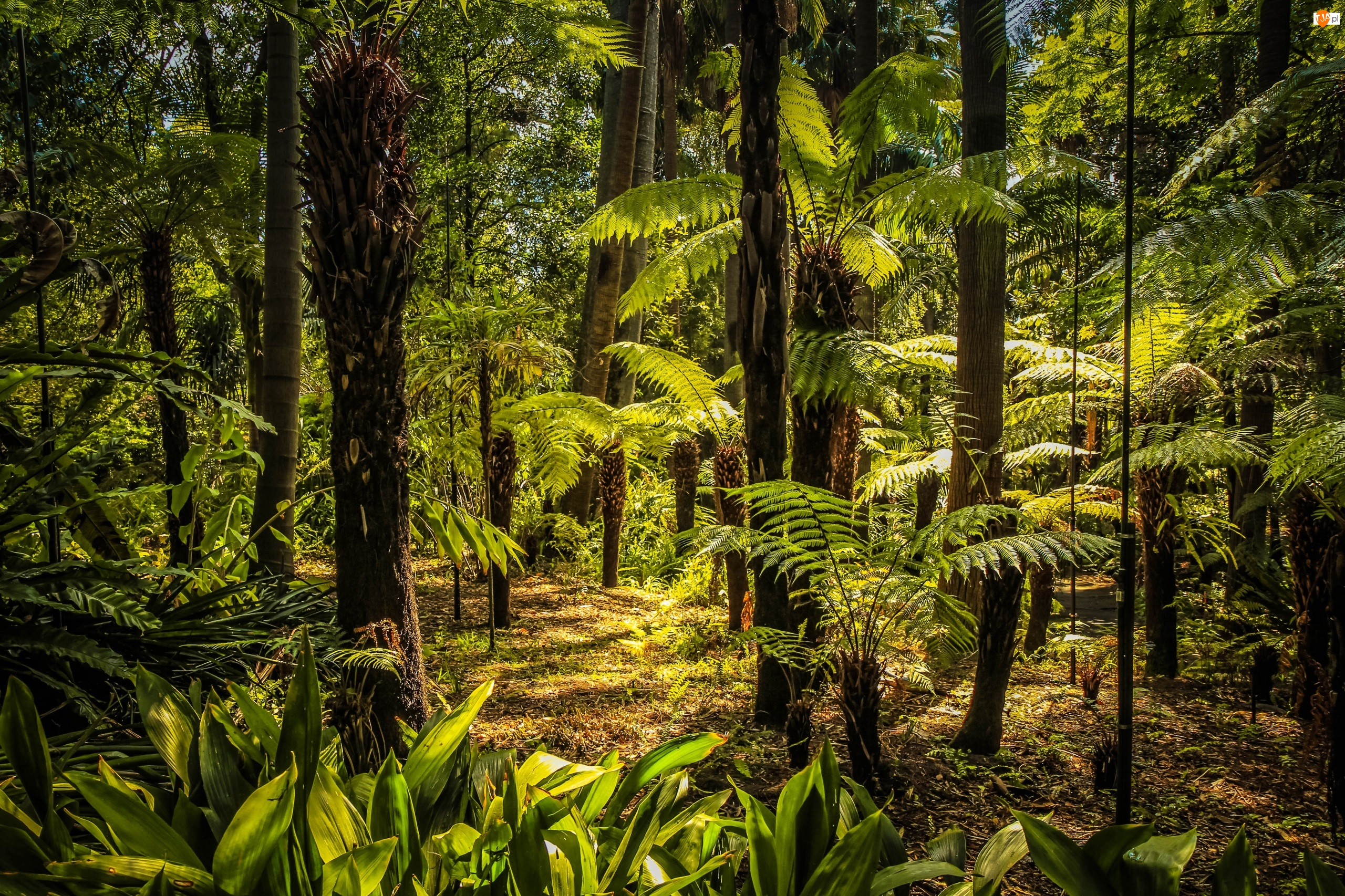 Australia, Park, Melbourne, Royal Botanic Gardens