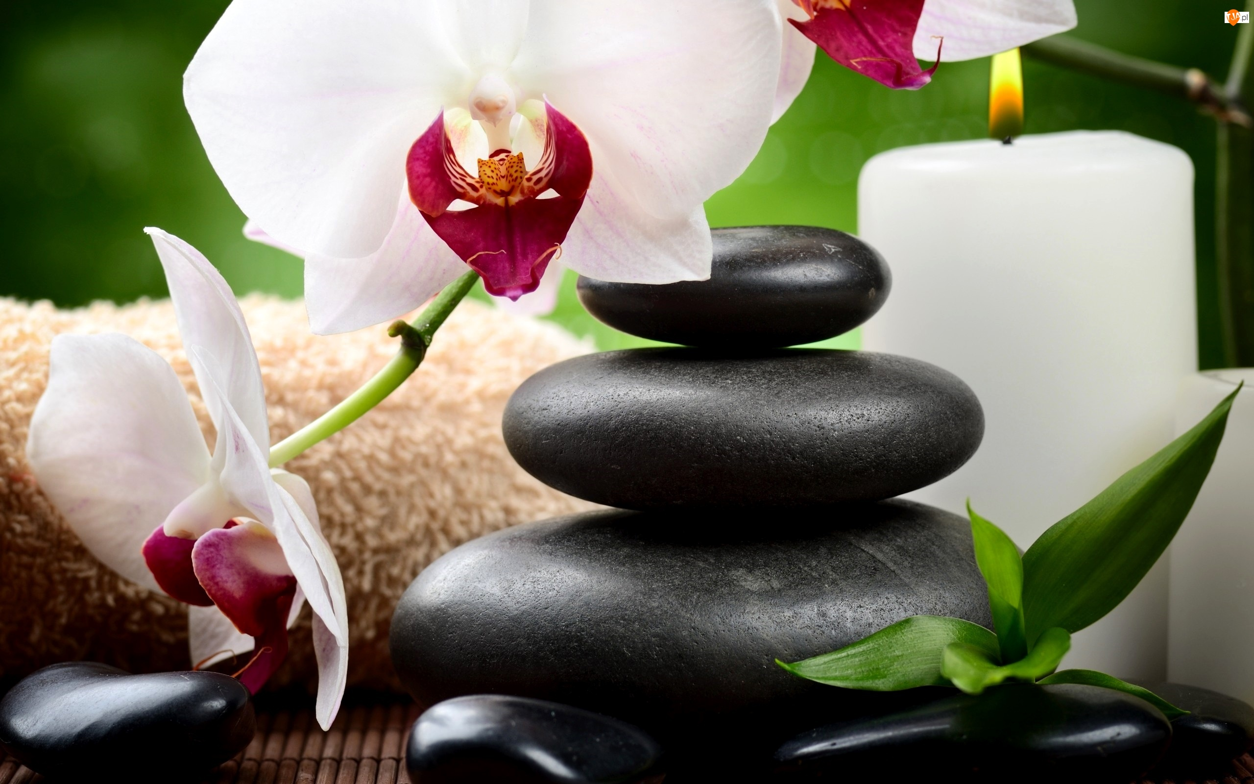 Kompozycja Świeca, Orchidea, Kamienie, Świeca, SPA
