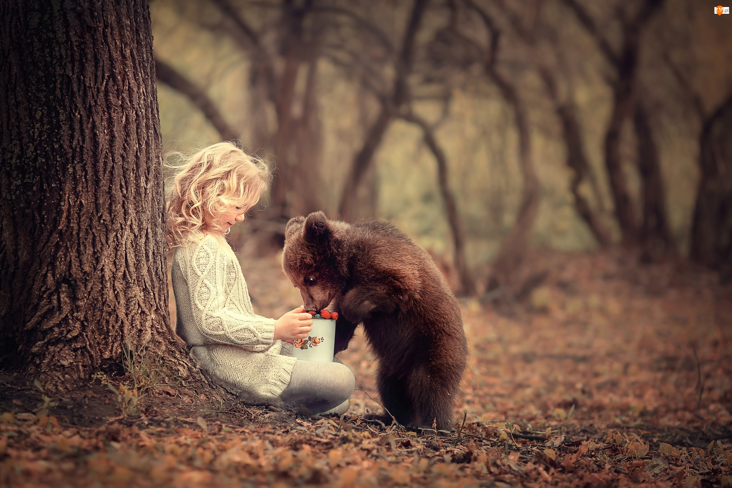 Dziewczynka, Owoce, Drzewo, Niedźwiadek, Las, Garnuszek