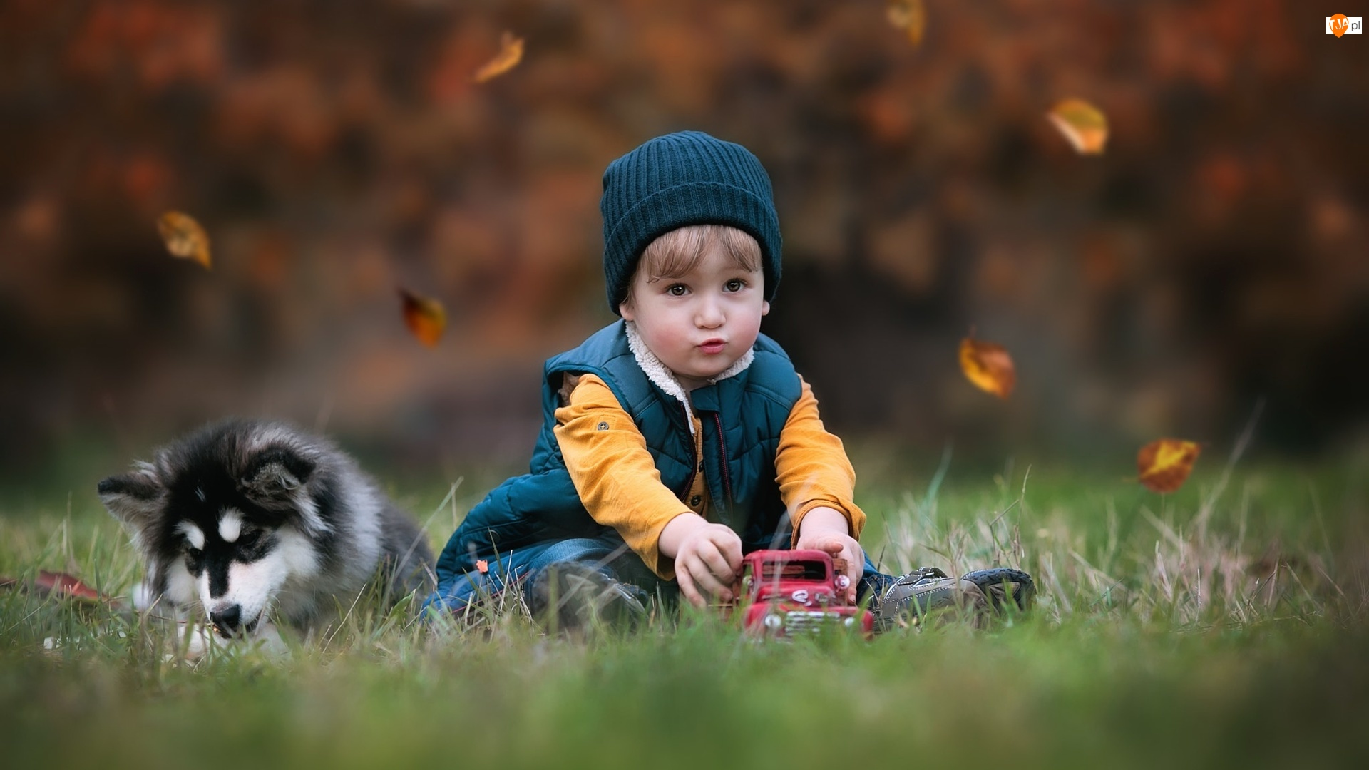 Alaskan Malamute, Pies, Zabawka, Jesień, Chłopczyk, Liście, Dziecko, Trawa, Samochodzik, Szczeniak