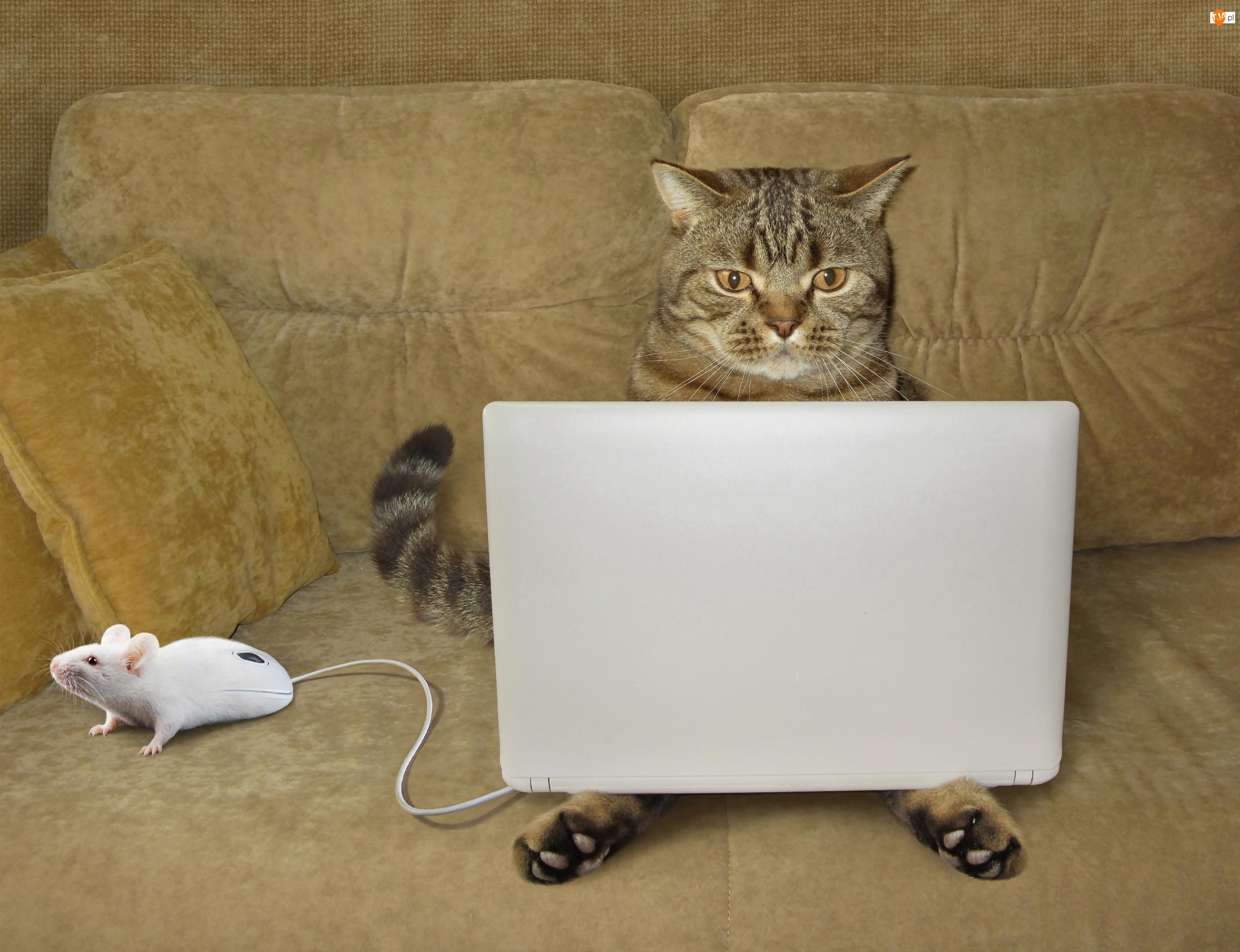 Śmieszne, Kot, Myszka, Laptop, Kanapa