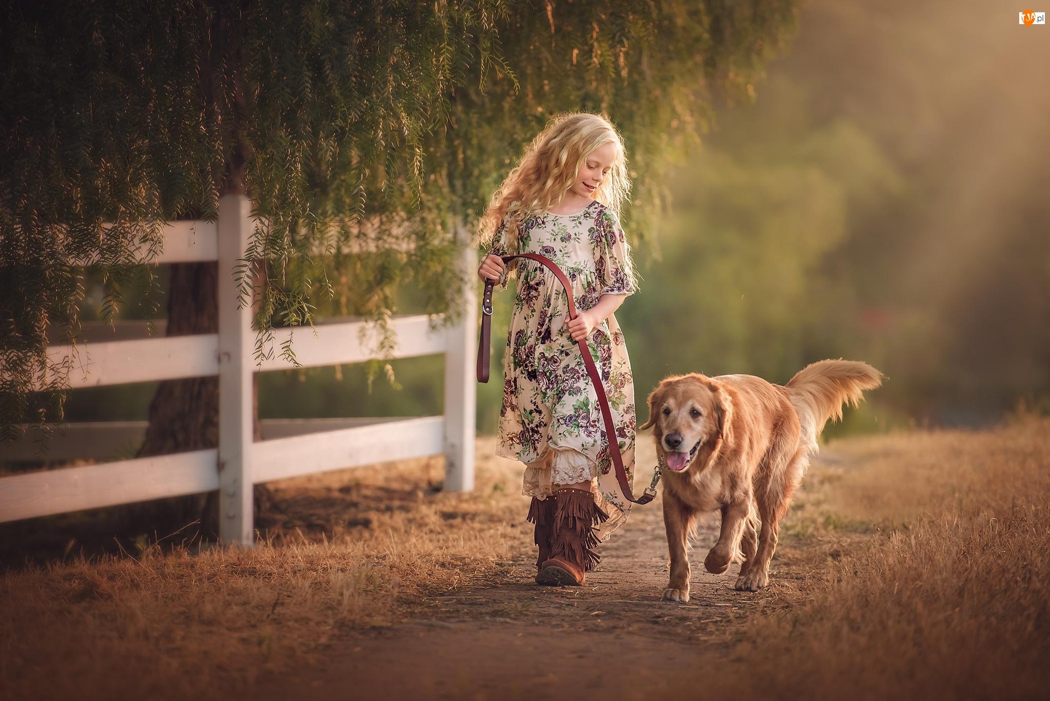 Golden retriever, Dziewczynka, Płot, Drzewo, Spacer, Ścieżka, Pies