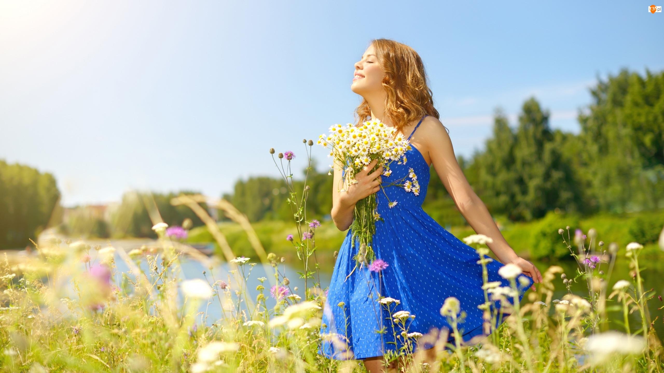 Sukienka, Rumianek, Kobieta, Łąka, Niebieska, Kwiaty