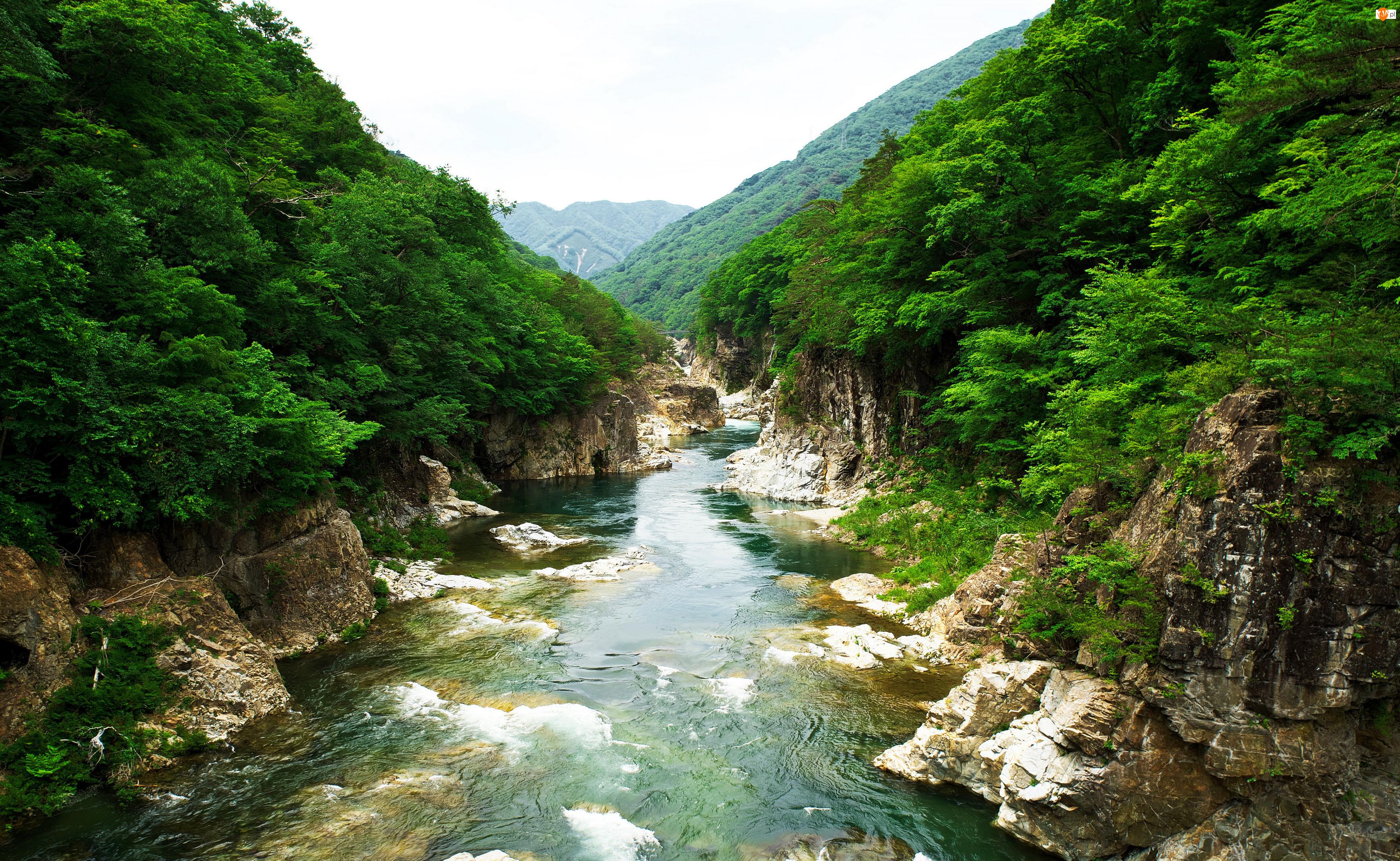 Drzewa, Rzeka, Wyspa Honsiu, Japonia, Góry, Park Narodowy Nikkō, Kamienie