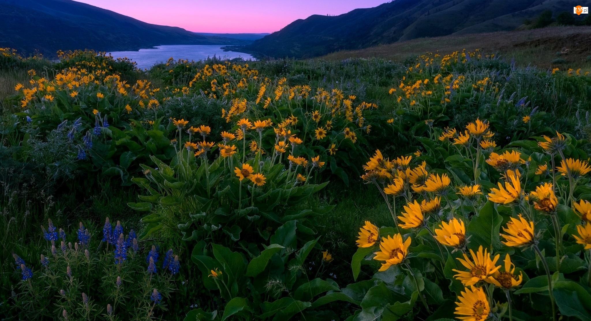 Góry, Wzgórza, Stan Oregon, Stany Zjednoczone, Rzeka, Rezerwat przyrody Columbia River Gorge, Kwiaty