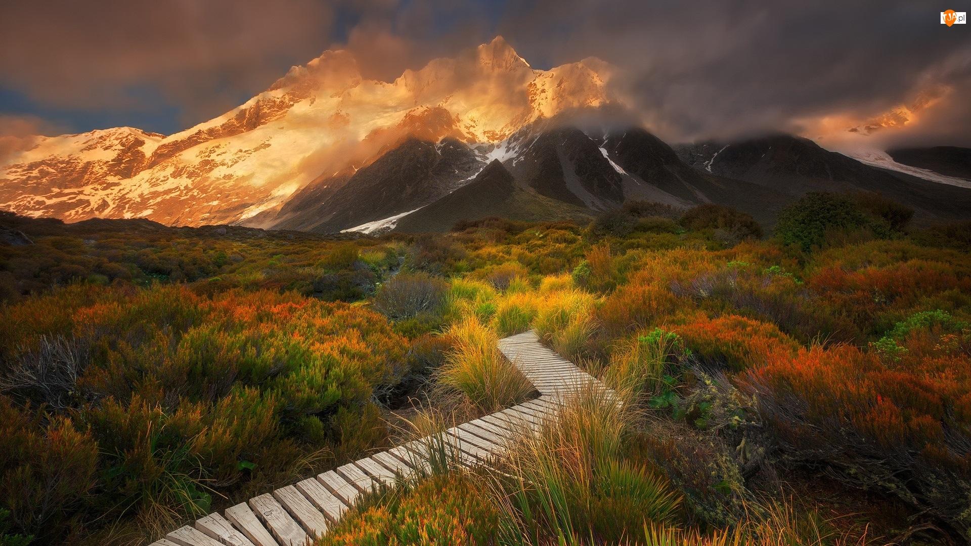 Roślinność, Góry, Park Narodowy Góry Cooka, Nowa Zelandia, Dróżka, Szlak Hooker Valley, Góra Cooka