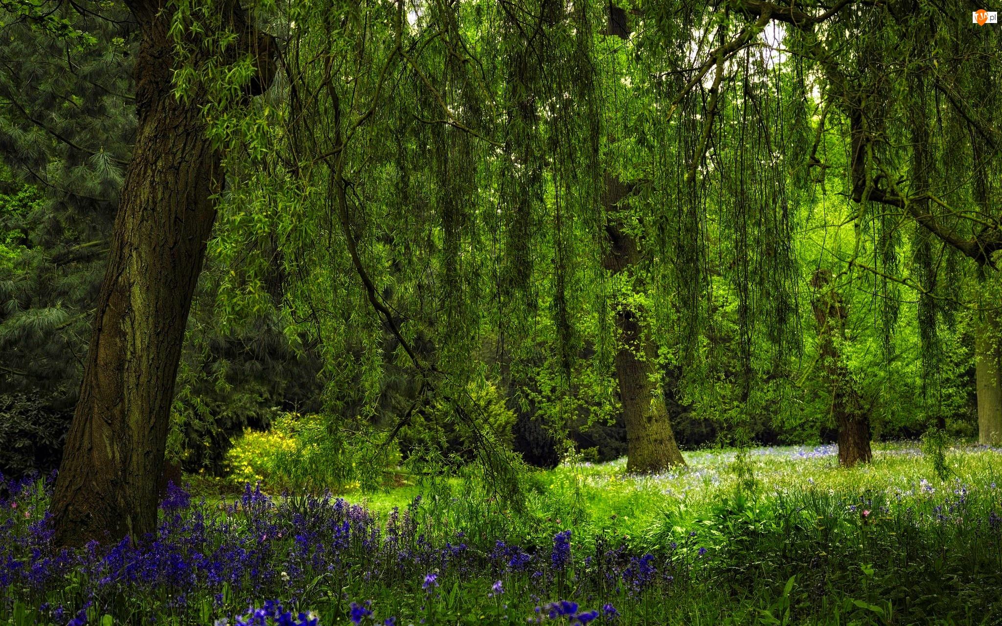 Kwiaty, Las, Gałęzie, Drzewo, Polana