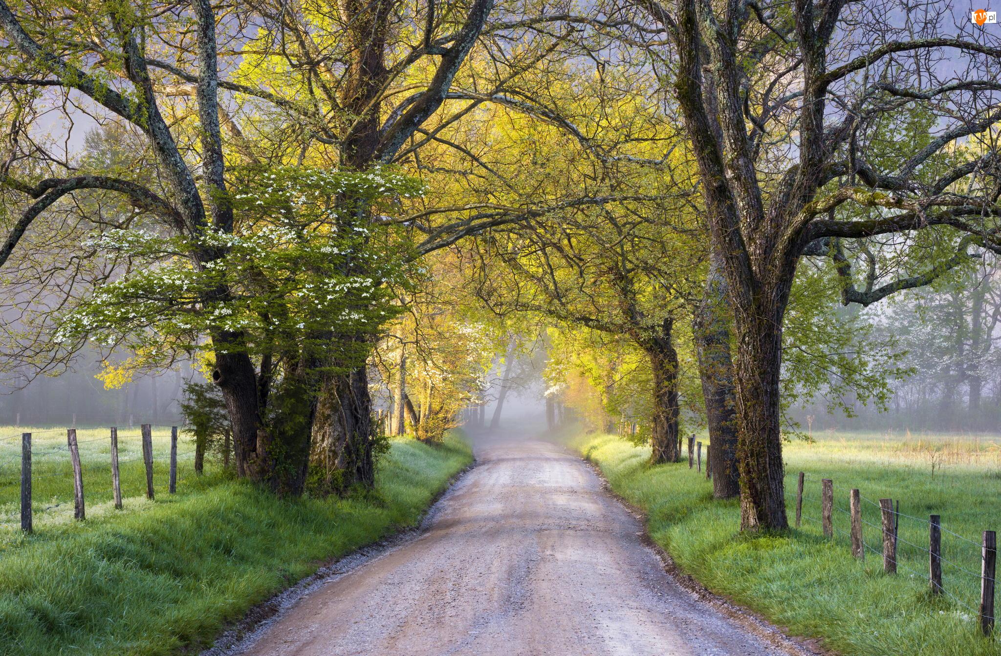 Droga, Dolina Cades Cove, Stan Tennessee, Stany Zjednoczone, Drzewa, Park Narodowy Great Smoky Mountains, Wiosna