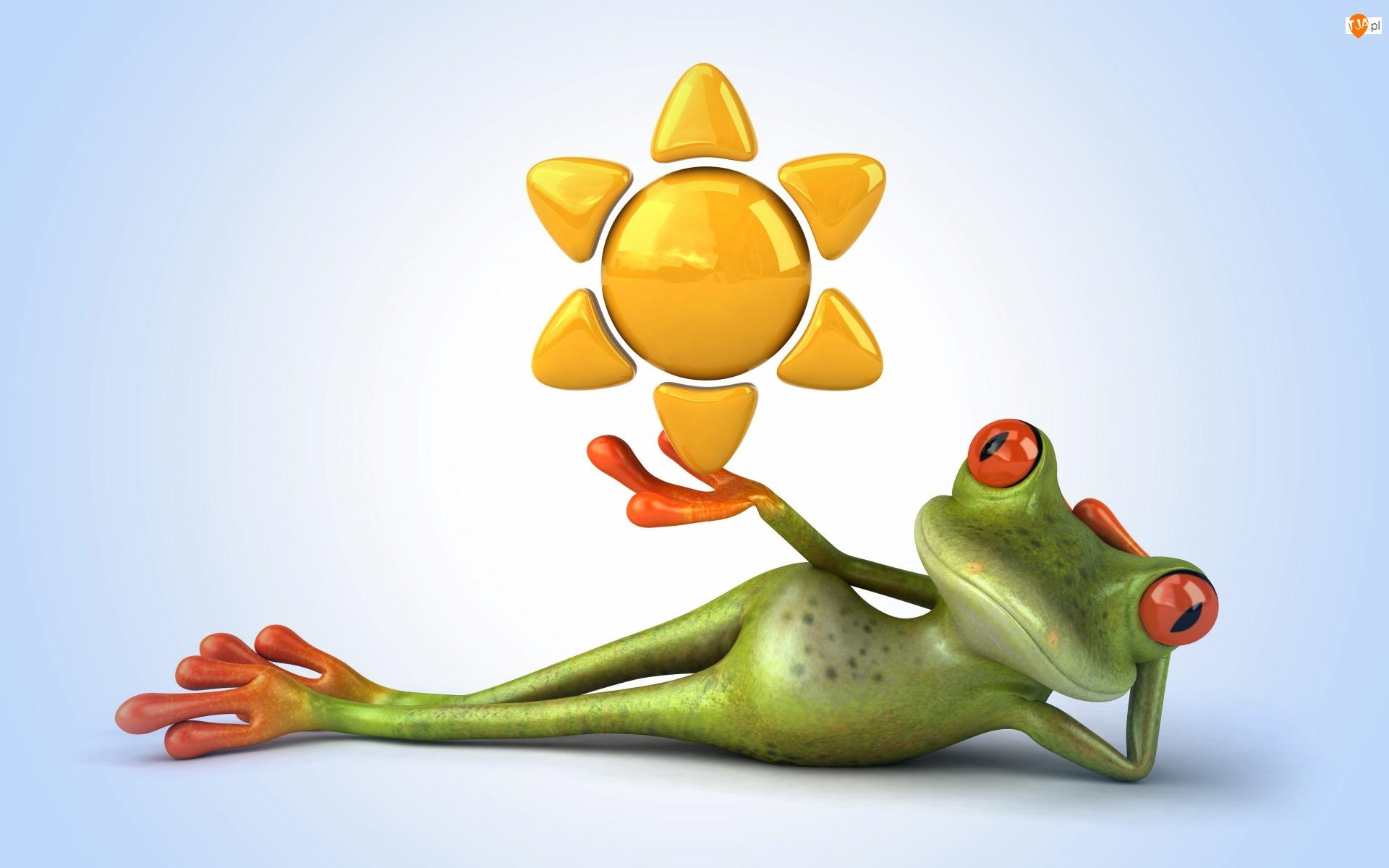 Słońce, Śmieszne, Żabka
