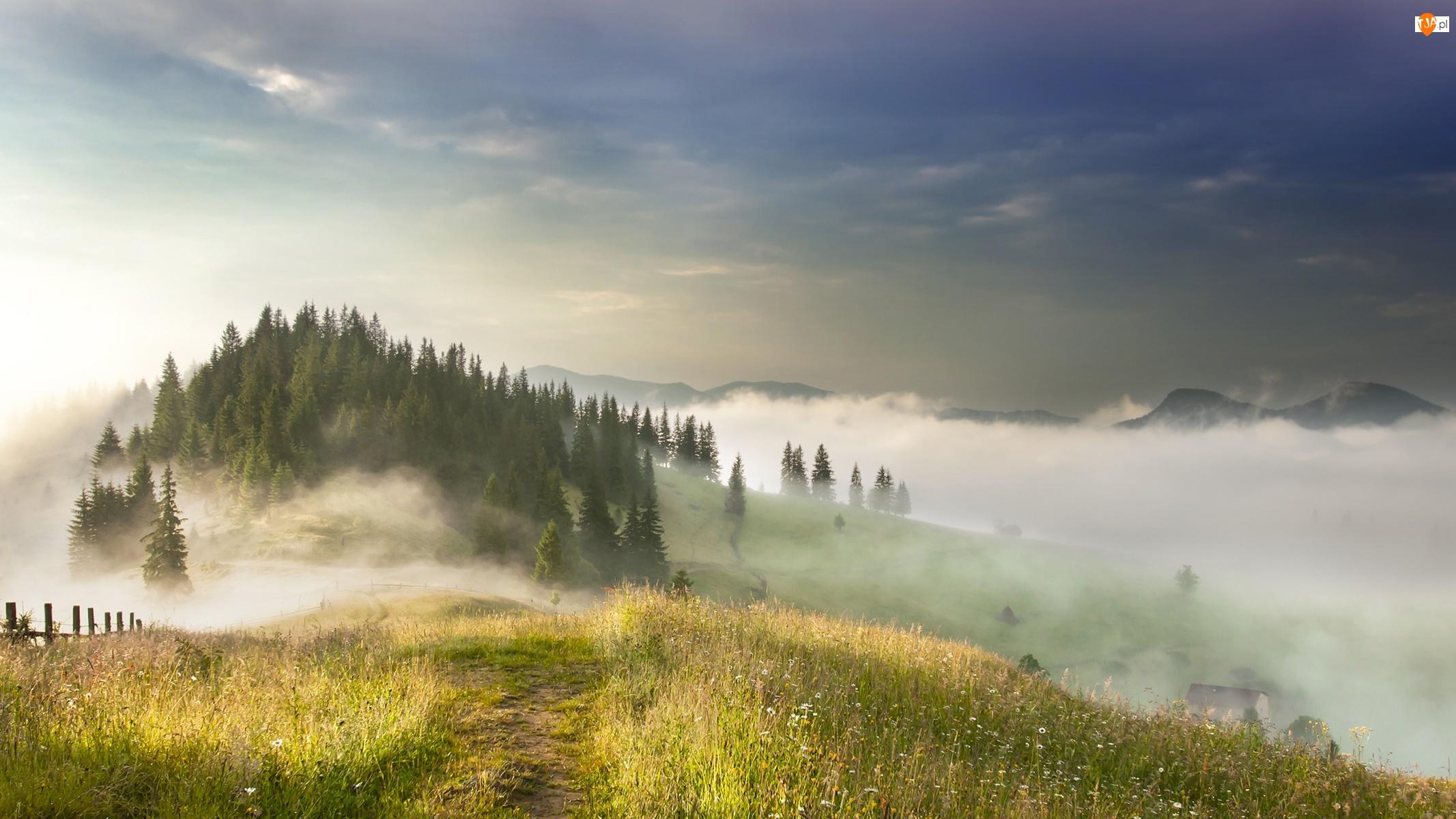 Góry Karpaty, Mgła, Ukraina, Drzewa, Ścieżka, Poranek