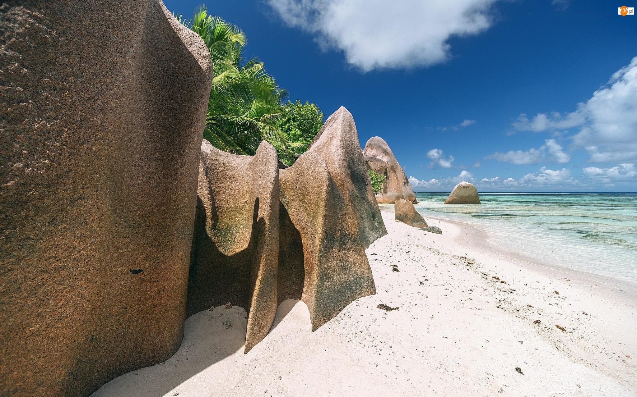 Plaża, Palmy, Seszele, Tropiki, Wyspa La Digue, Skały