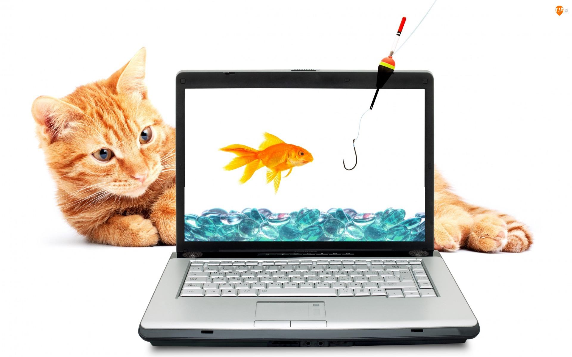 Wędka, Laptop, Kot, Śmieszne, Haczyk, Rudy, Rybka