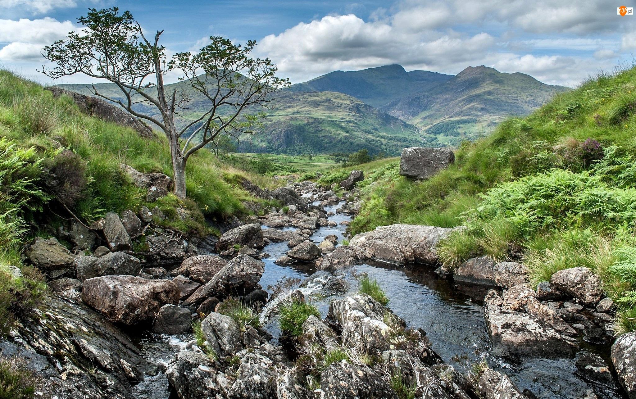 Wzgórza, Kamienie, Walia, Drzewo, Park Narodowy Snowdonia, Rzeczka