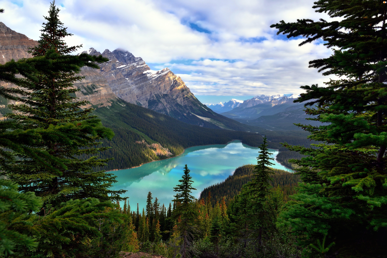 Góry, Jezioro Moraine, Prowincja Alberta, Kanada, Świerki, Park Narodowy Banff, Drzewa