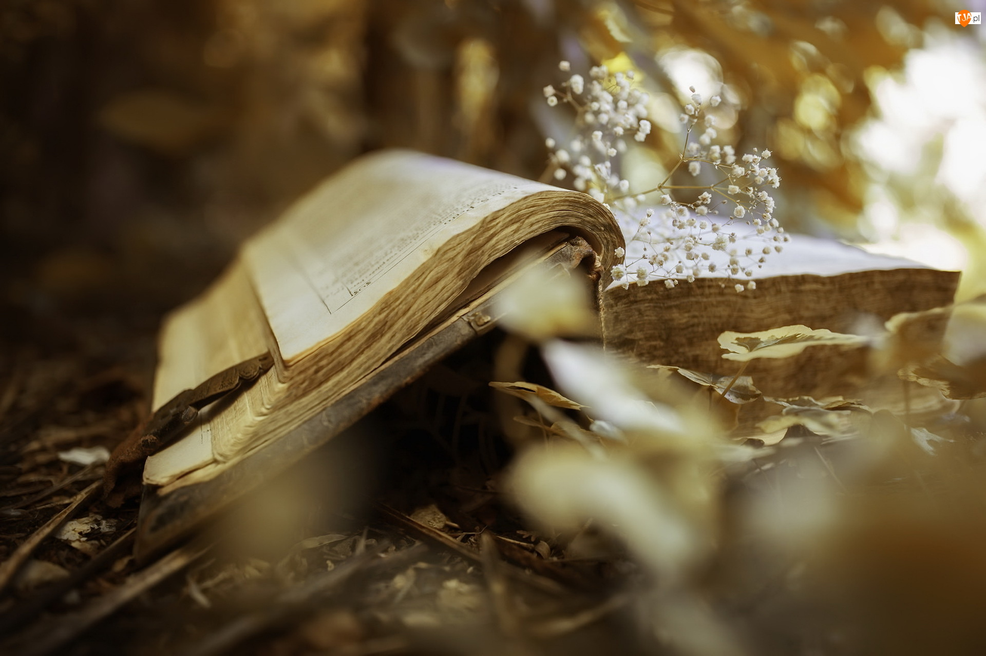 Książka, Gipsówka