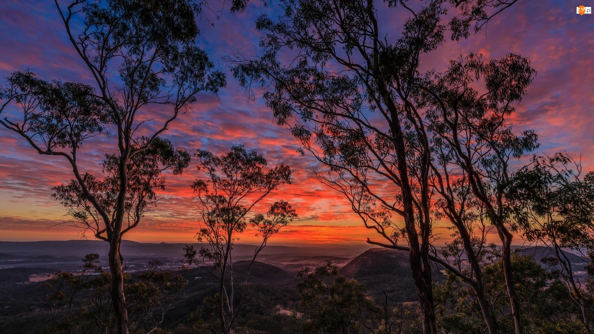 Drzewa, Wschód słońca, Czerwone