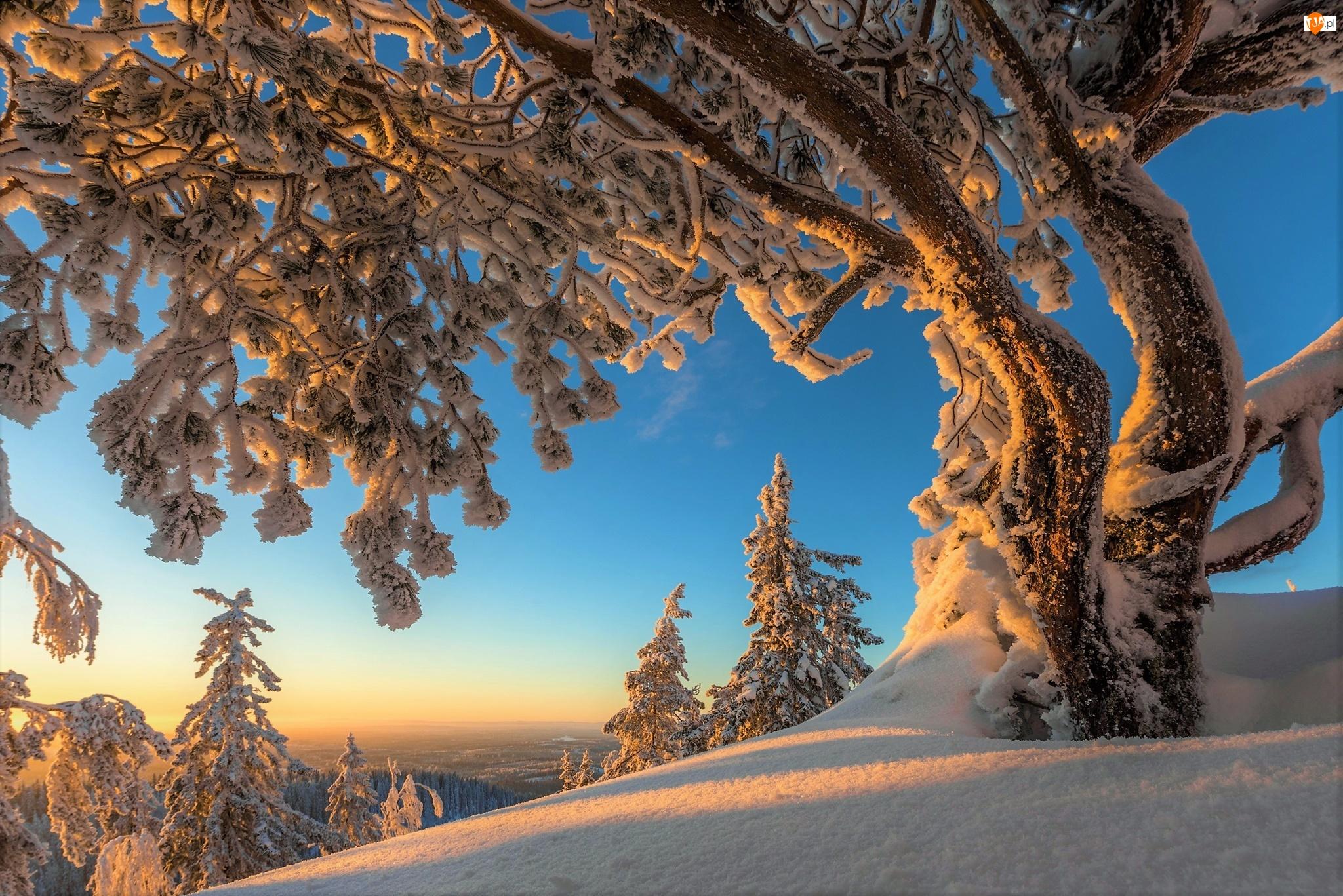 Drzewo, Zima, Karelia Północna, Finlandia, Poranek, Park Narodowy Koli, Oszronione