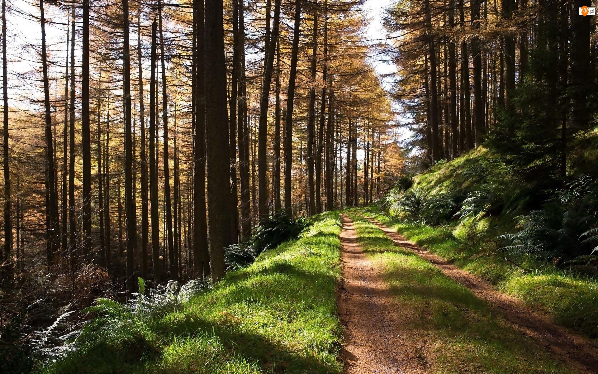 Las, Przebijające światło, Droga, Paprocie