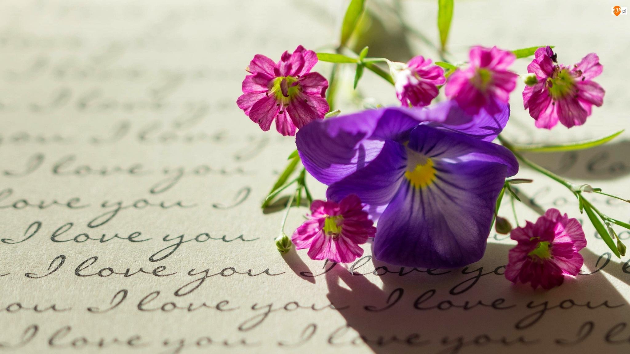 Miłosne, Bratek, Napis, Kwiaty