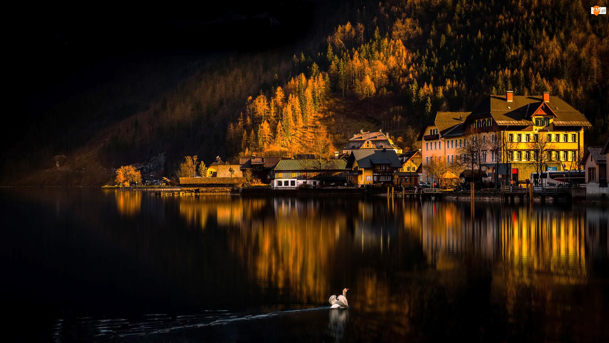 Jezioro Hallstättersee, Domy, Austria, Łabędź, Miasteczko Hallstatt, Góry Alpy Salzburskie