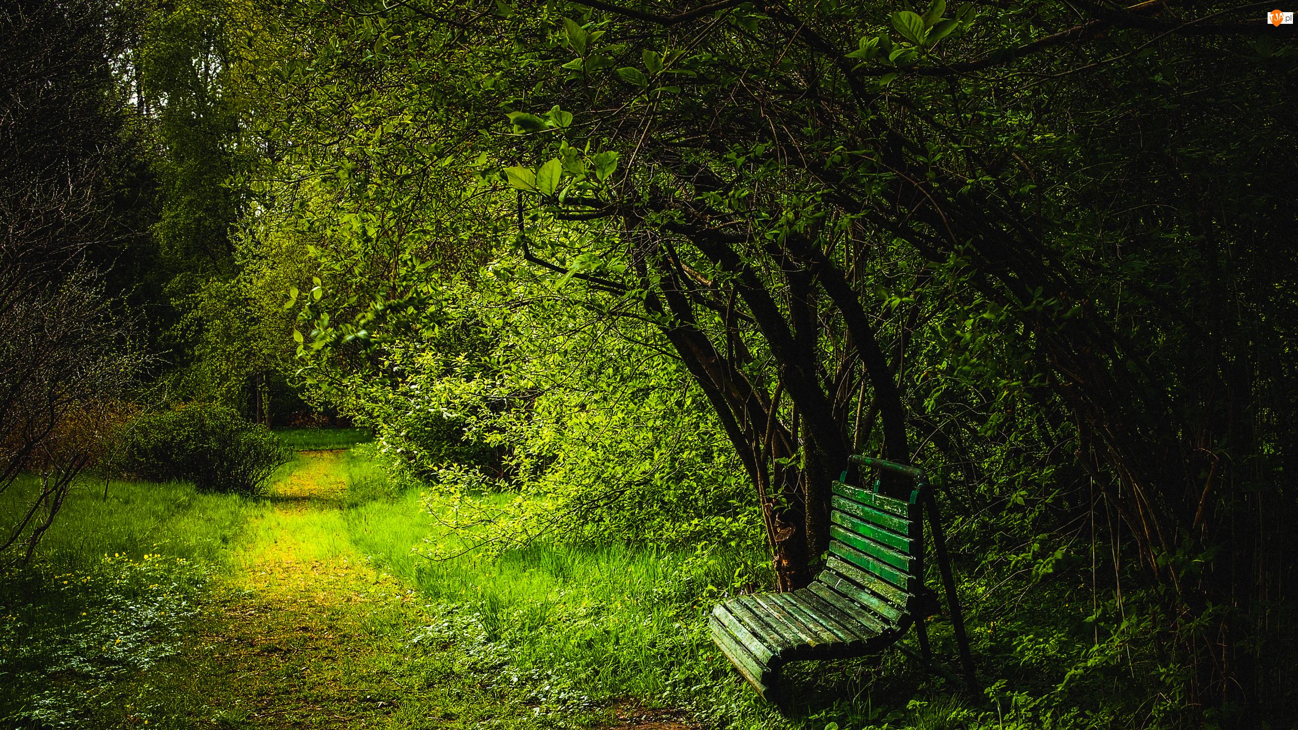 Ławka, Drzewa, Roślinność, Ścieżka