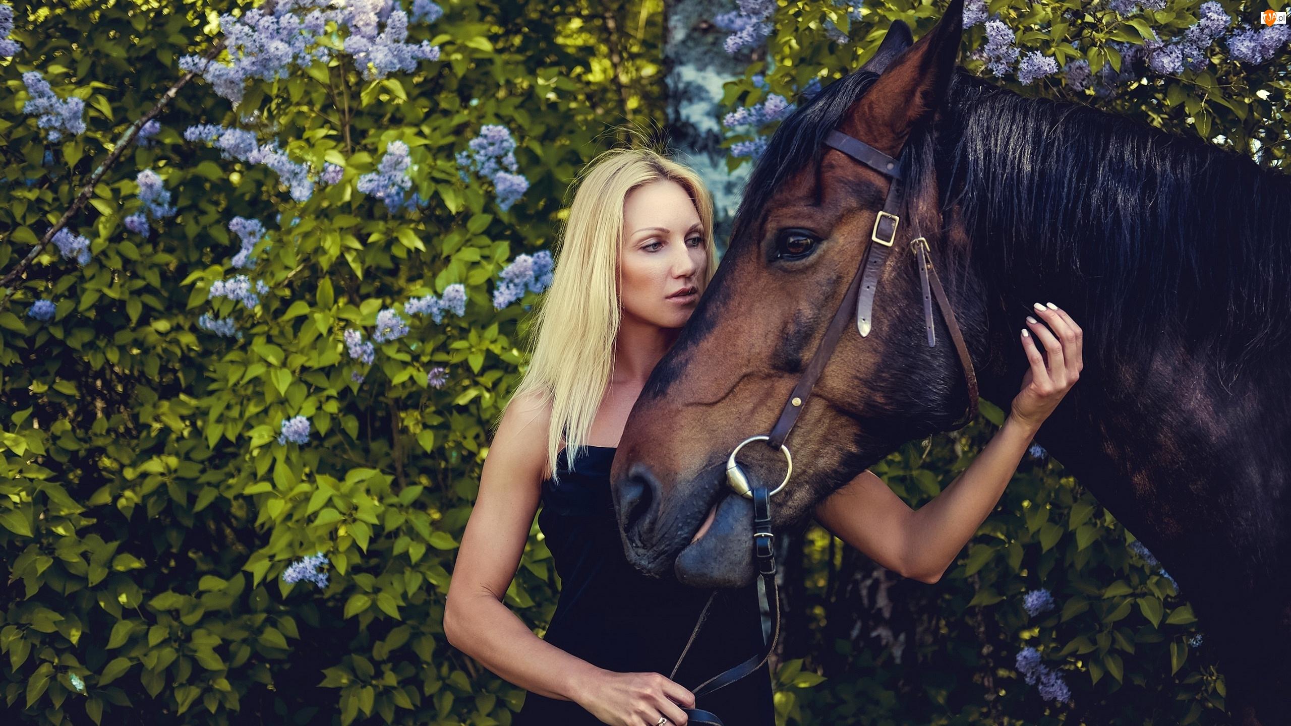 Krzew bzu, Kobieta, Koń