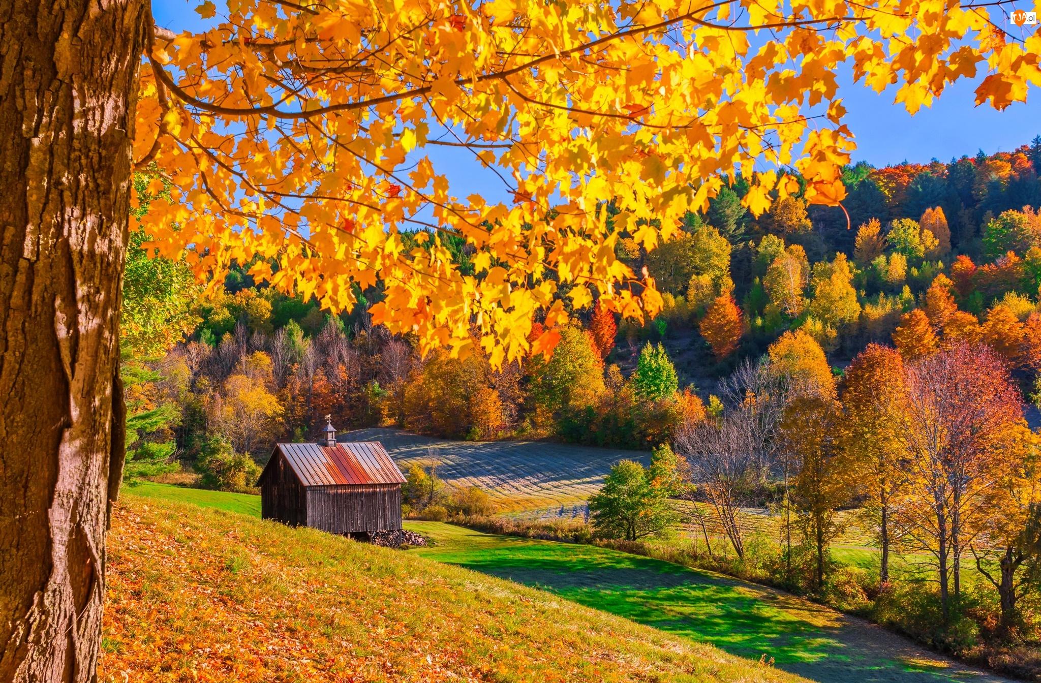 Pole, Drzewa, Stan Vermont, Stany Zjednoczone, Chatka, Pomfret, Jesień