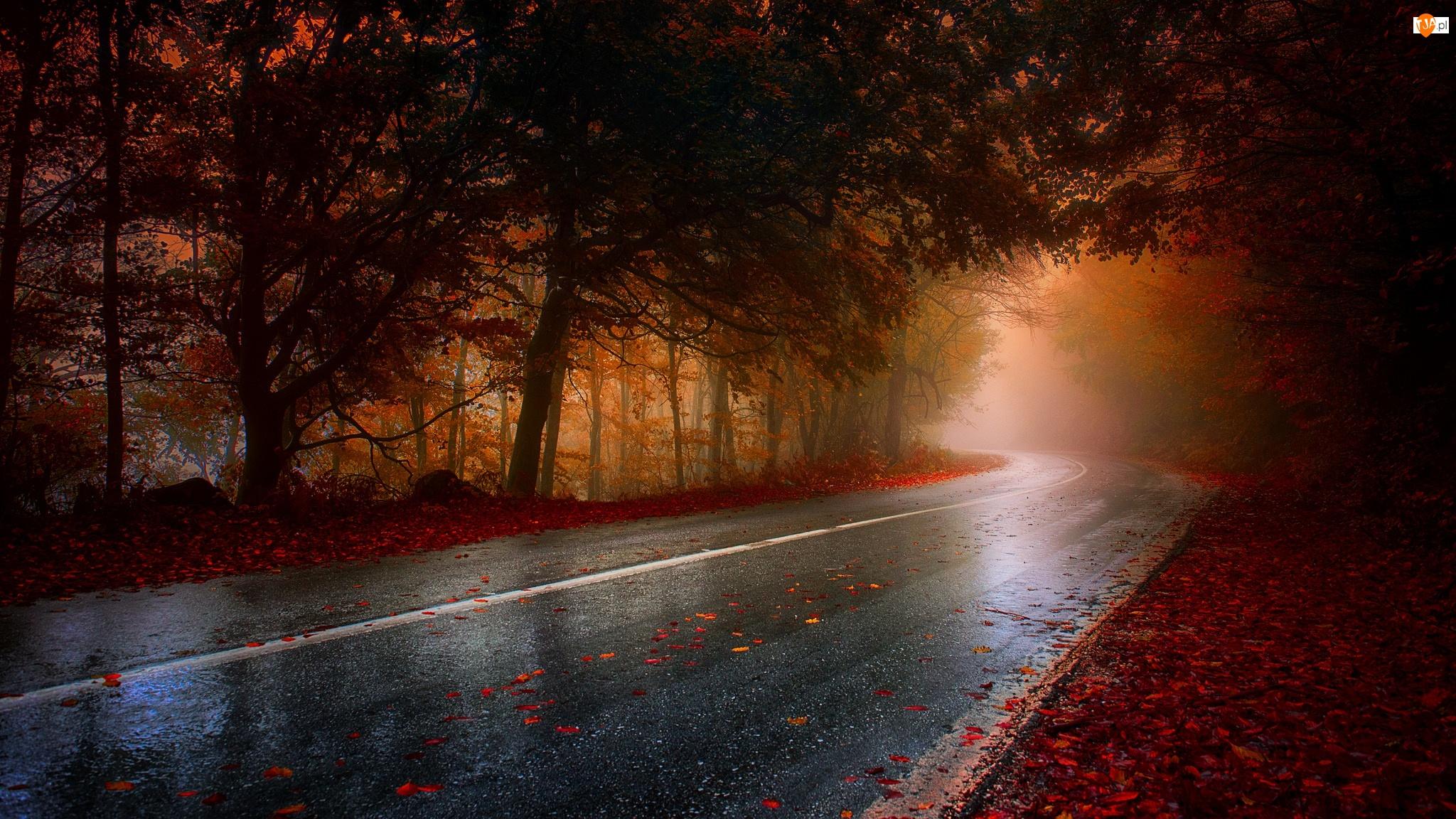 Jesień, Droga, Drzewa, Las, Mgła