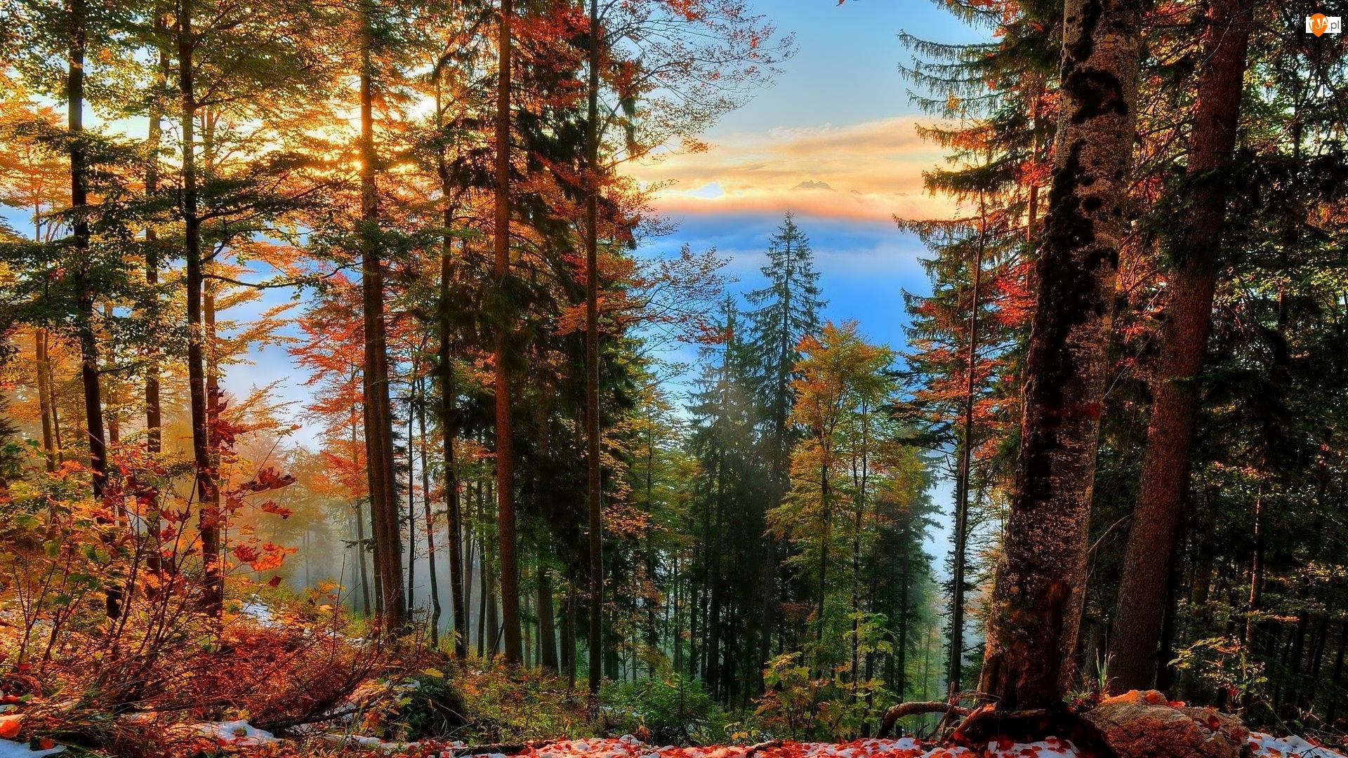 Las, Roślinność, Drzewa, Jesień