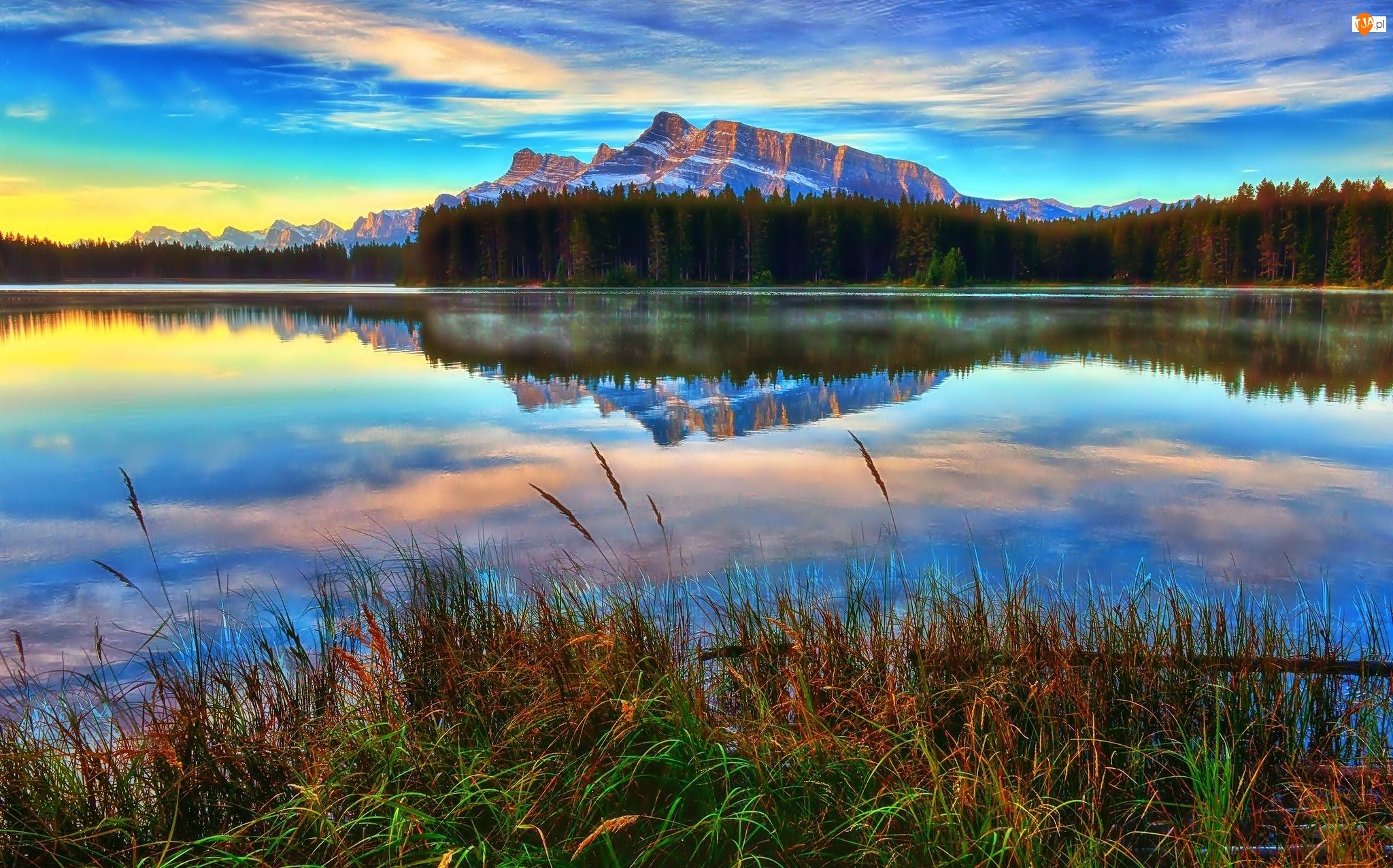 Las, Góry, Prowincja Alberta, Kanada, Trawa, Park Narodowy Banff, Jezioro