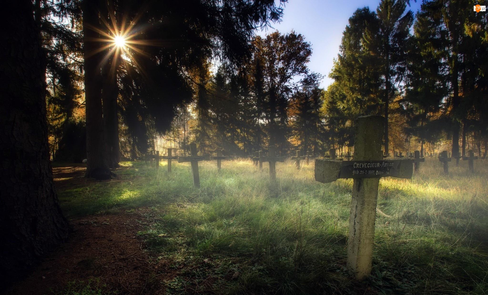 Promienie słońca, Cmentarz, Poranek, Drzewa, Mgła