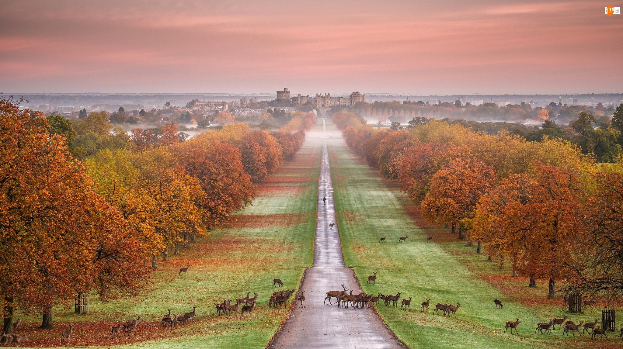 Jelenie, Park, Mgła, Anglia, Zamek Windsor, Wielka Brytania, Droga, Hrabstwo Berkshire, Drzewa