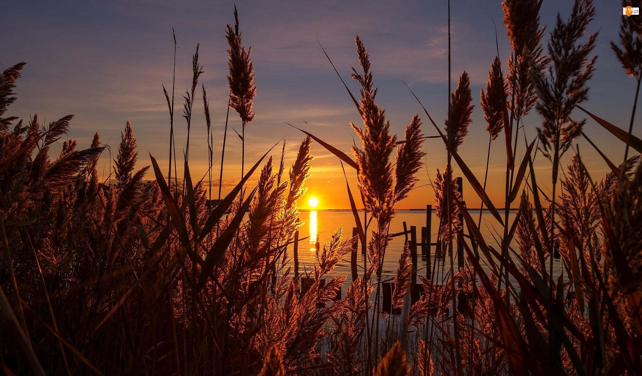 Jezioro, Trzcina pospolita, Zachód Słońca, Trawy