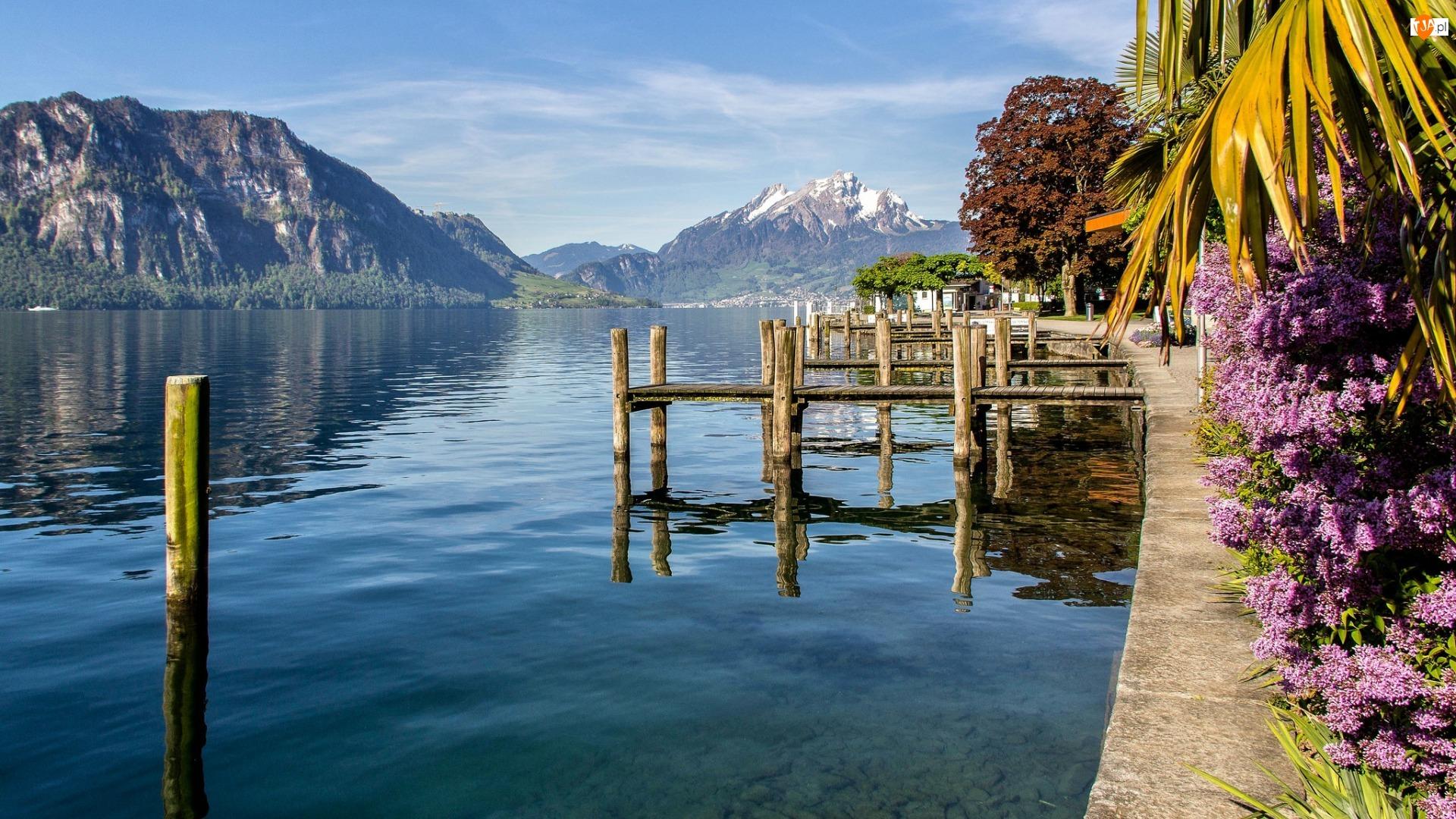 Kwiaty, Góry, Bez, Kanton Lucerna, Jezioro Czterech Kantonów, Szwajcaria, Drzewa, Gmina Weggis, Pomosty