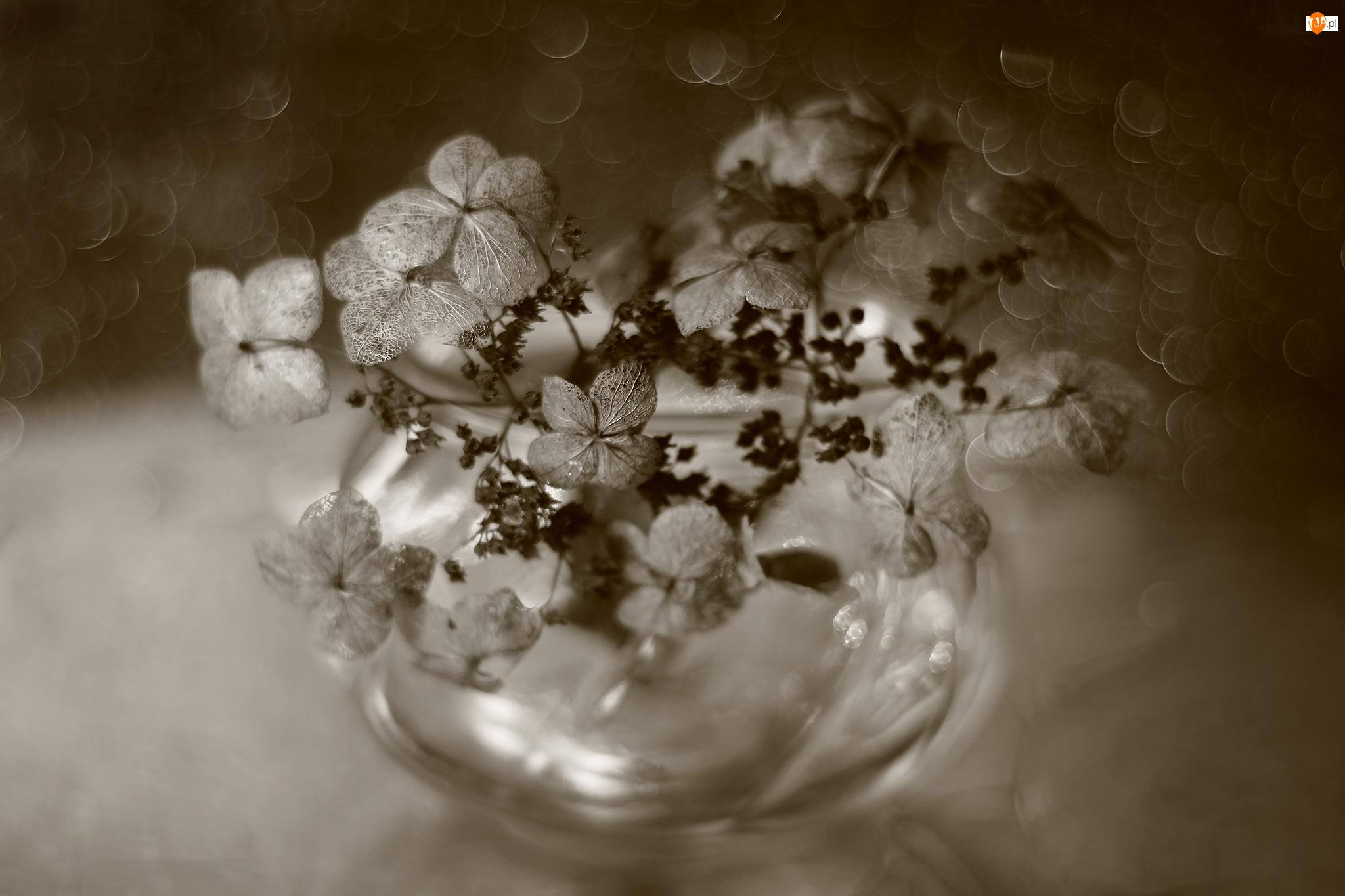 Kwiaty, Bokech, Hortensja, Sepia, Suche, Wazonik