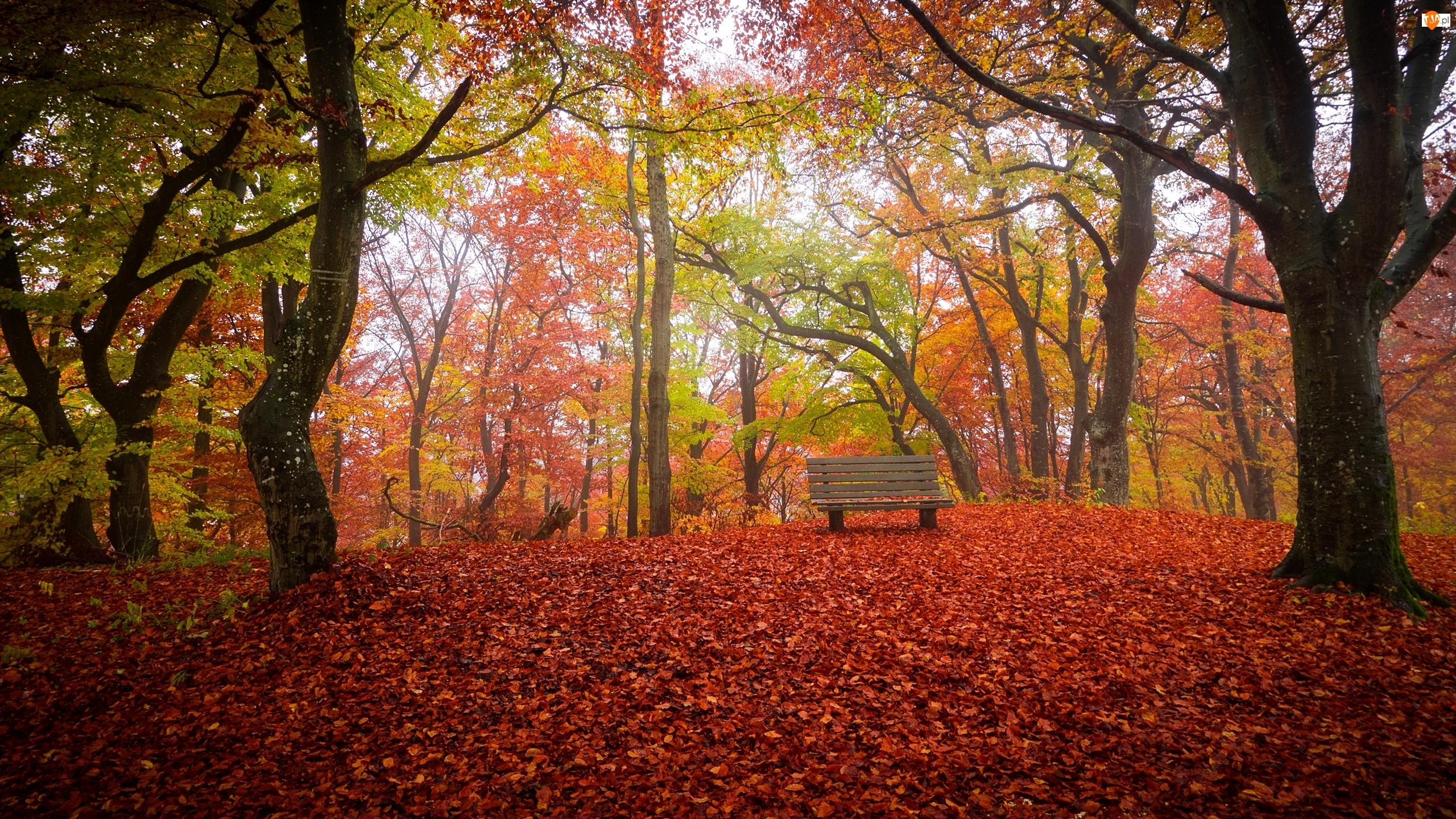 Park, Jesień, Drzewa, Ławka